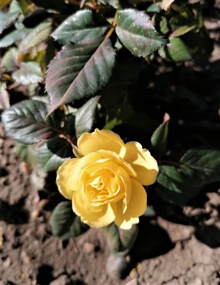 22.03.2020 záhrada ožíva. Záhony sa pomaličky vyfarbujú, na teraz dominuje zelená a žltá  :) - Obrázok č. 3