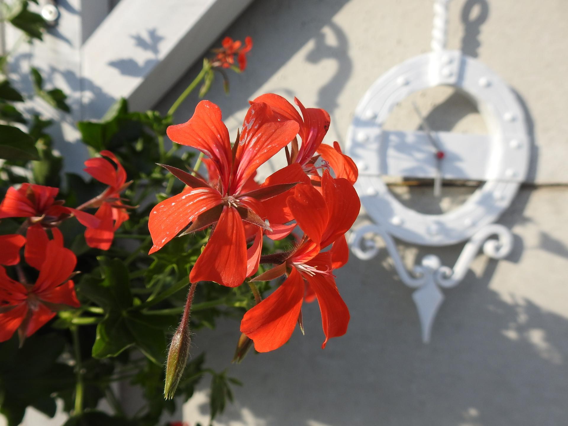 májový náhľad do záhrady - Obrázok č. 2