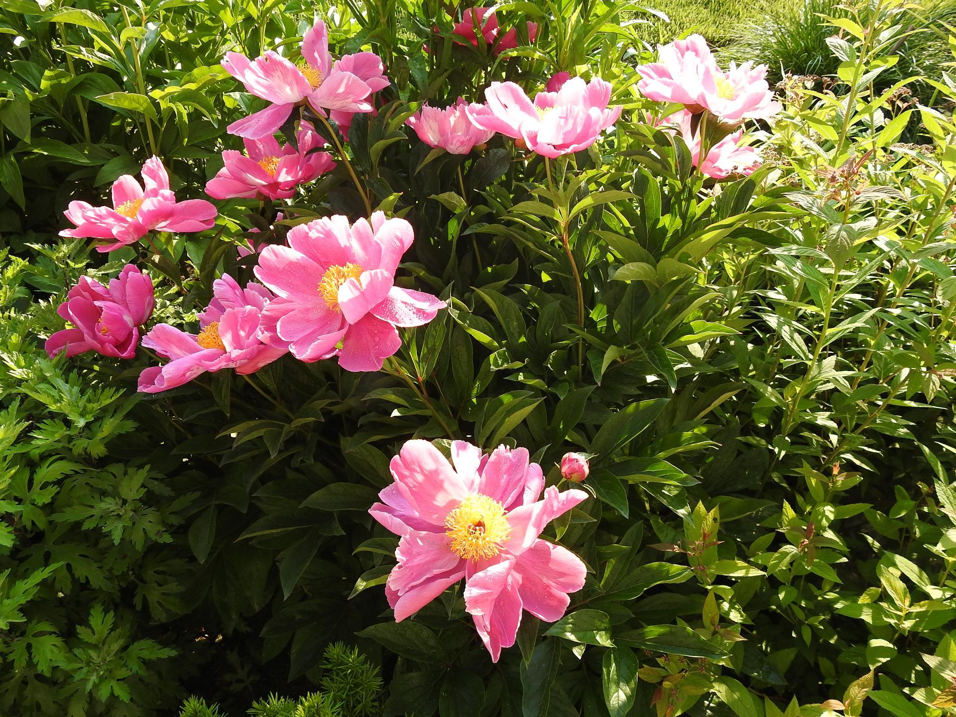 májový náhľad do záhrady - Obrázok č. 16