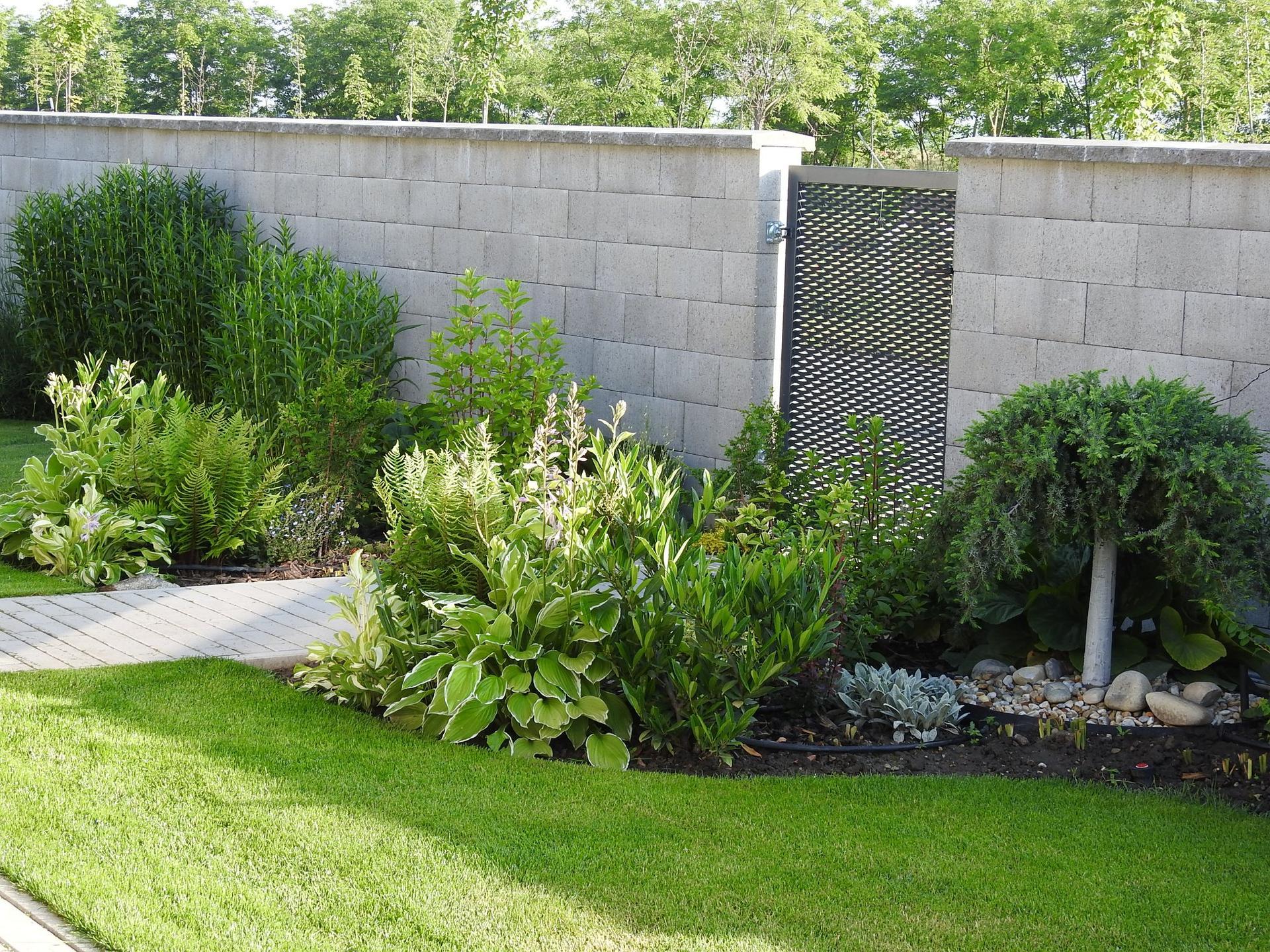 Hosta (Funkia) v záhrade, osvieži a okrášli každý tienistý kút - Obrázok č. 9