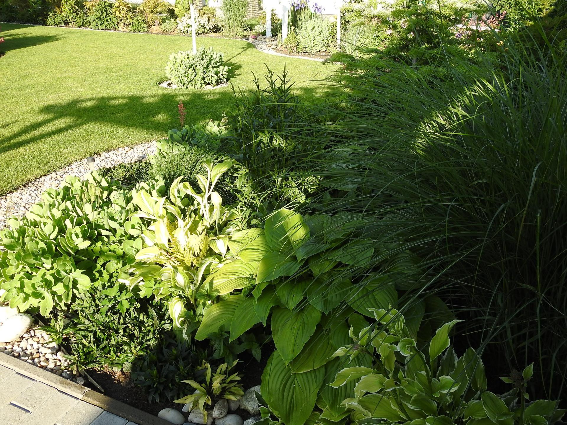Hosta (Funkia) v záhrade, osvieži a okrášli každý tienistý kút - Obrázok č. 14