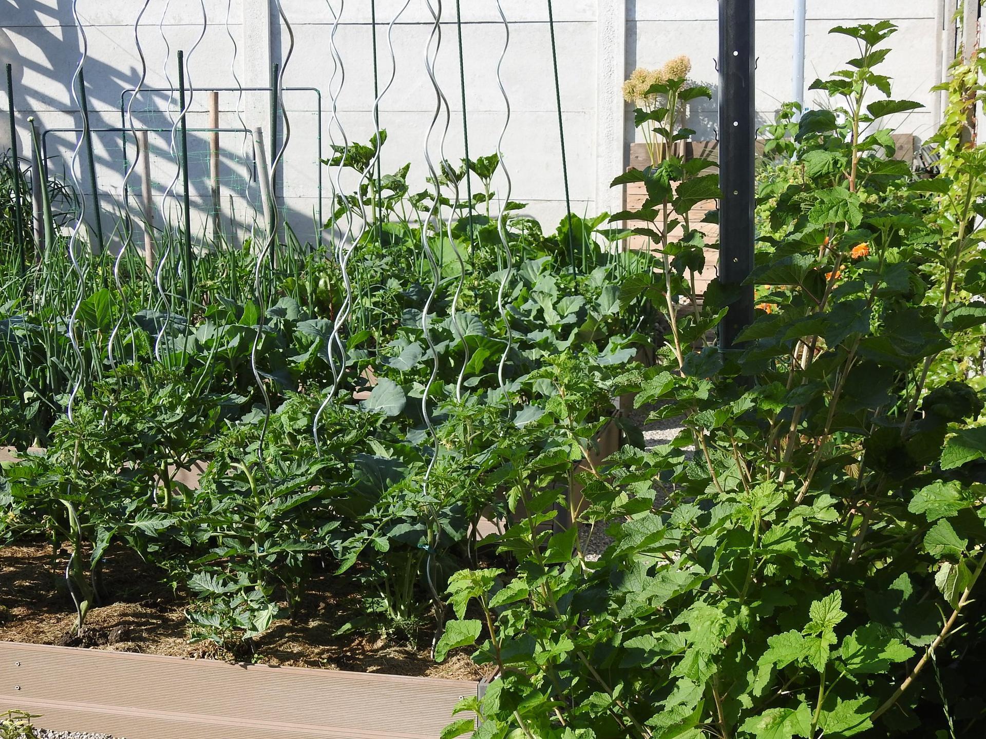 Úžitková časť záhrady - Obrázok č. 2