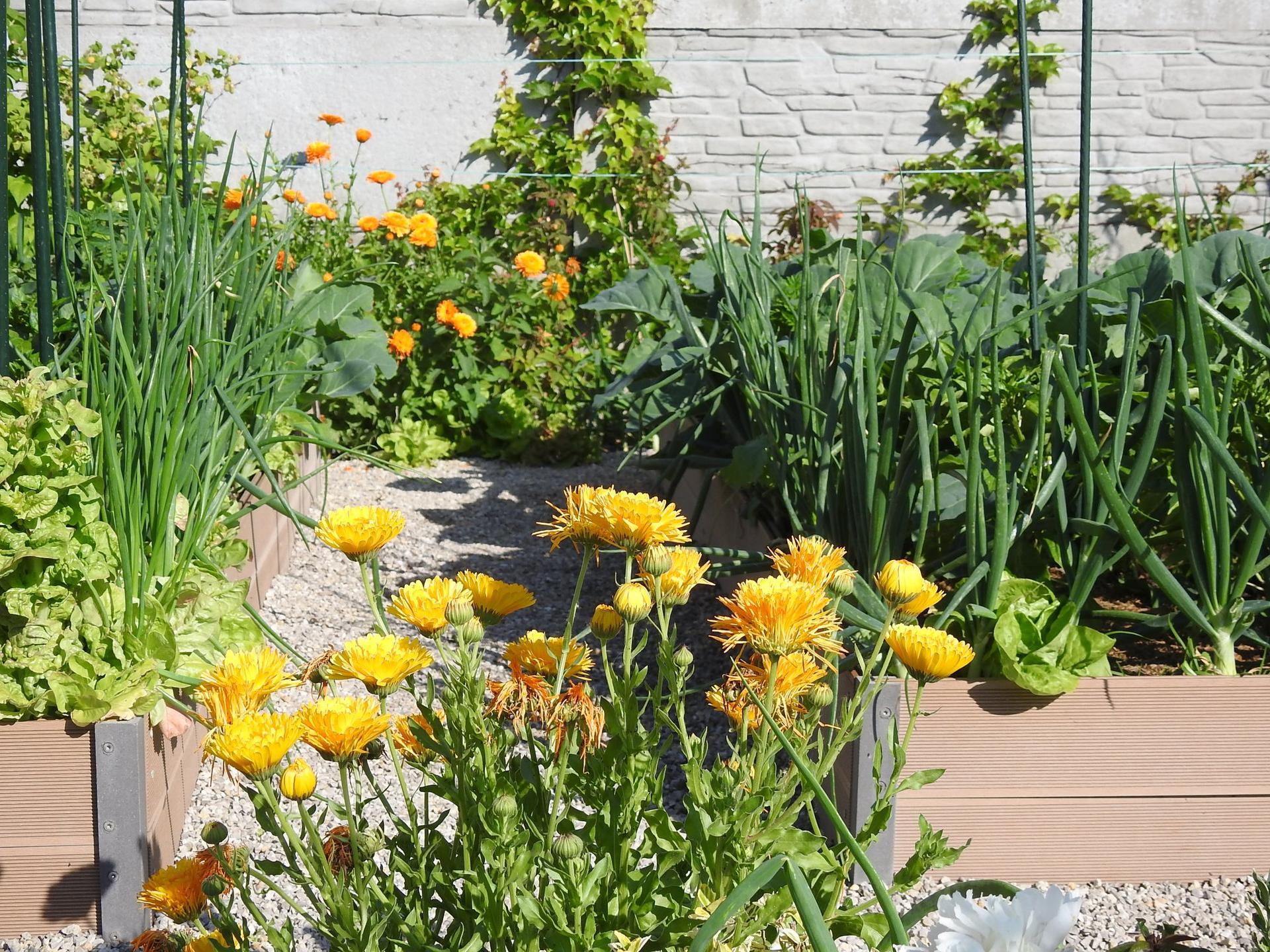 Úžitková časť záhrady - Obrázok č. 5
