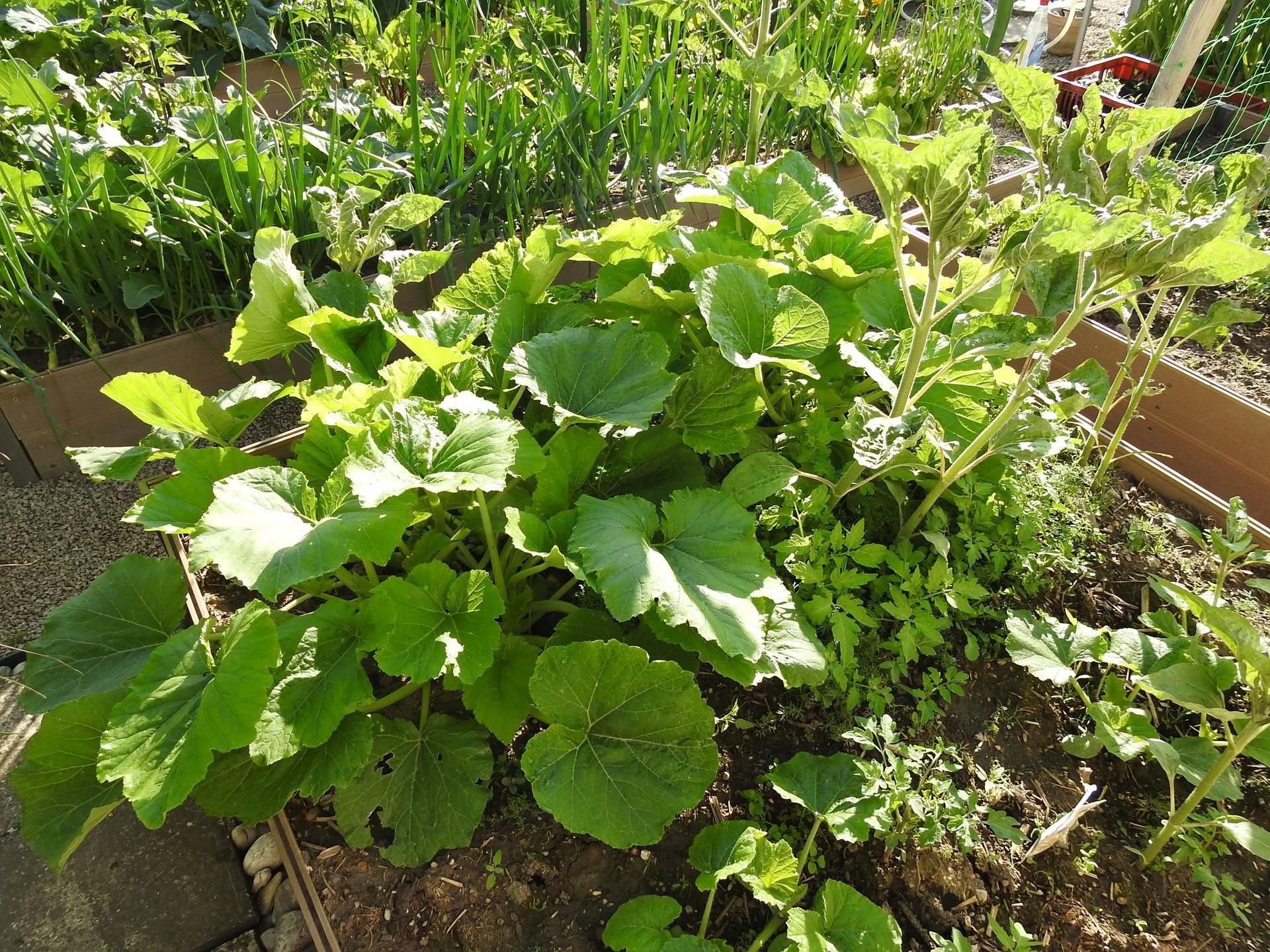 Úžitková časť záhrady - Obrázok č. 12