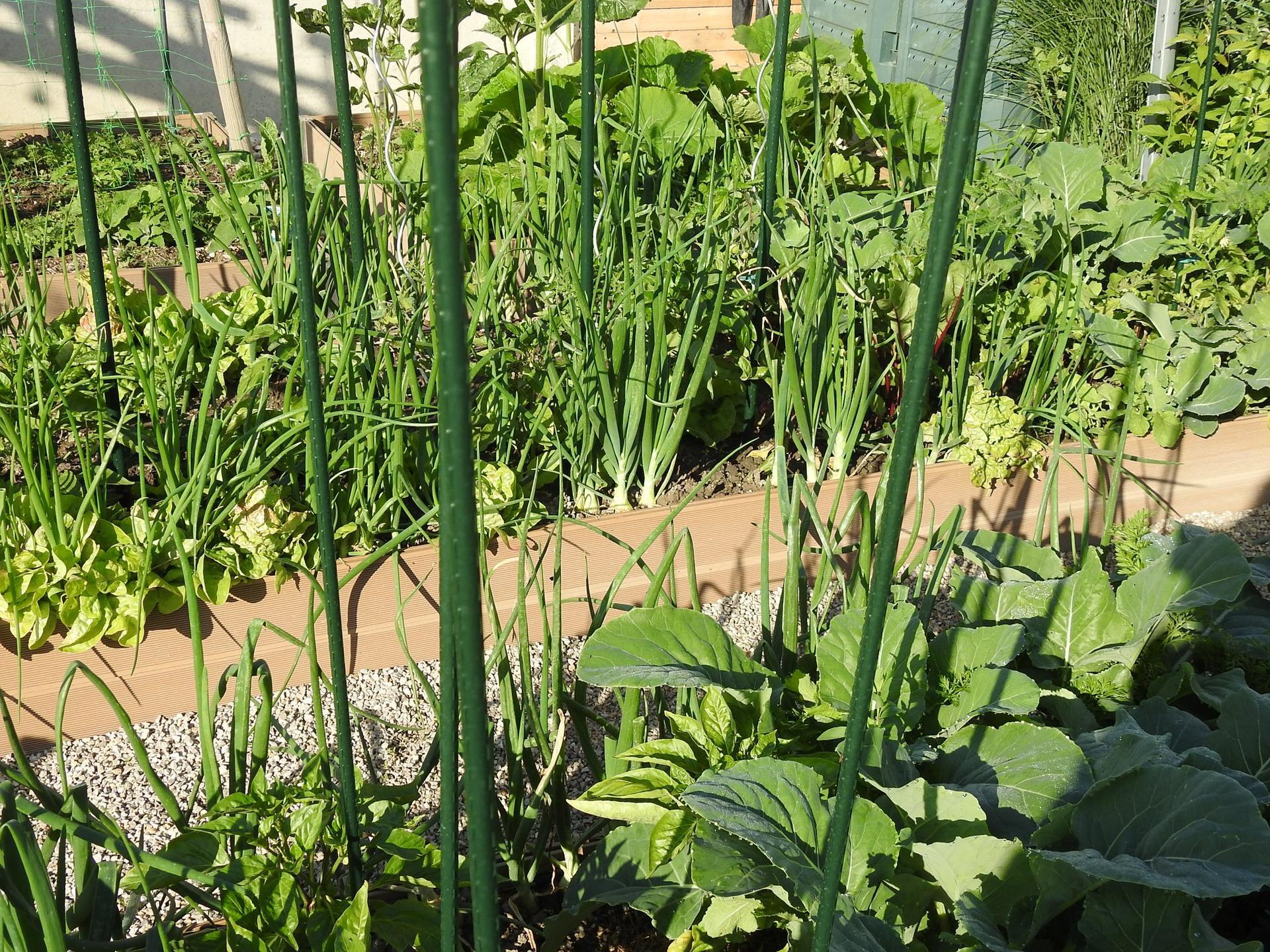 Úžitková časť záhrady - Obrázok č. 17