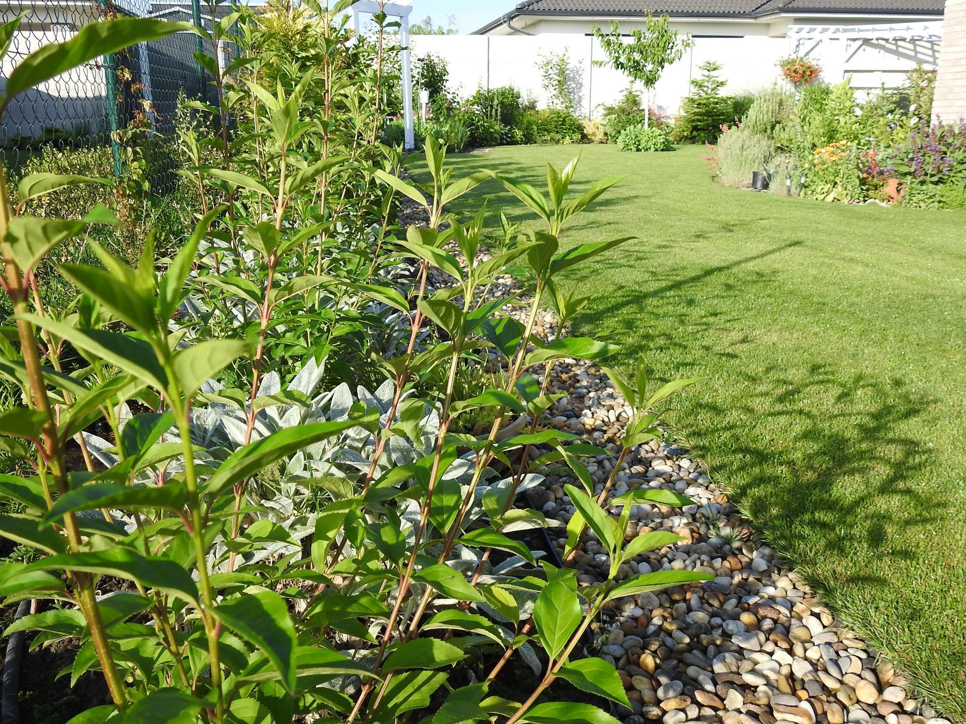 Návrh aj realizácia záhrady v mojom ponímaní - Obrázok č. 3