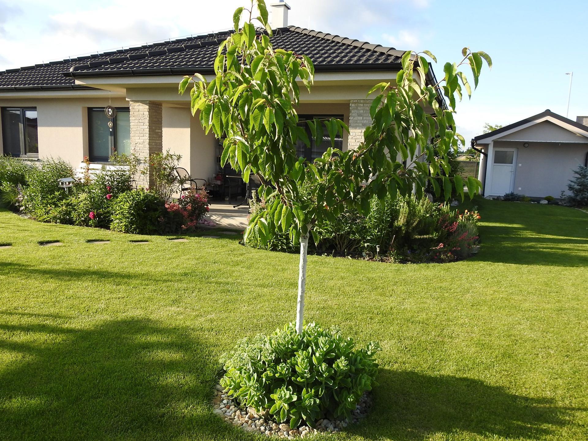 Návrh aj realizácia záhrady v mojom ponímaní - Obrázok č. 8