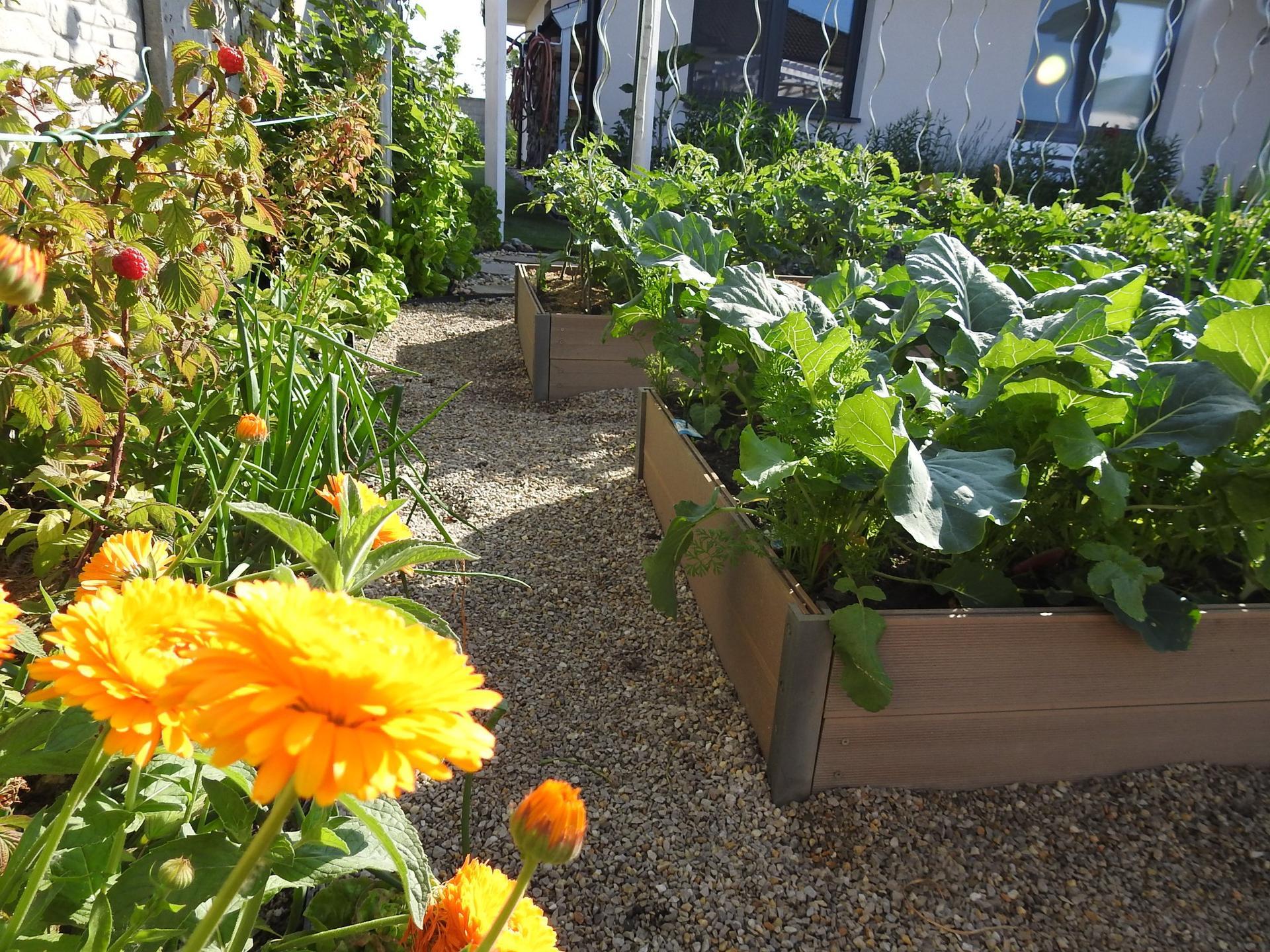 Návrh aj realizácia záhrady v mojom ponímaní - Skoro všetko pestujem vo vyvýšených záhonoch. Voľakedy som sa na ne pozerala ,,taký pánsky výmysel,, dnes? Mám ich sama a nedám na ne dopustiť-výborná vychytávka.