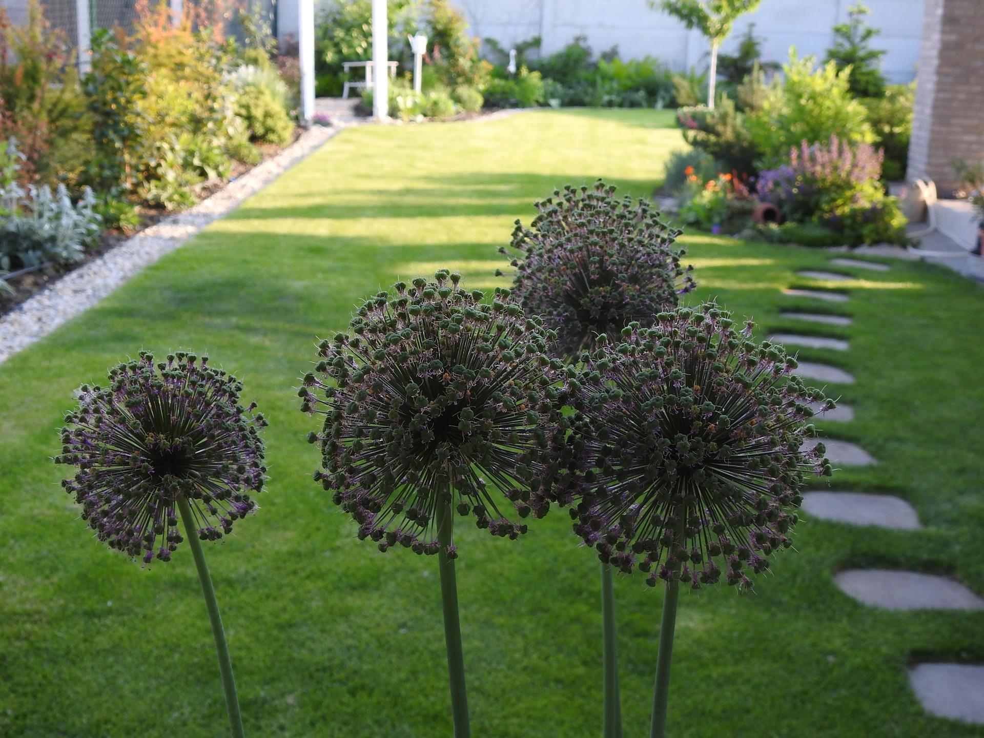 Návrh aj realizácia záhrady v mojom ponímaní - Obrázok č. 18