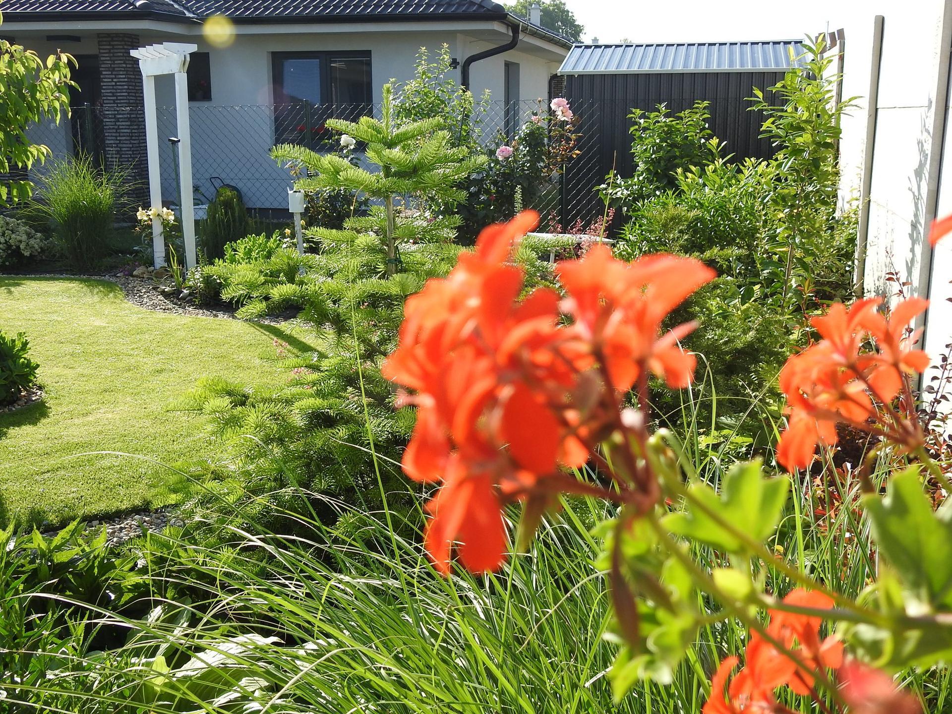 Návrh aj realizácia záhrady v mojom ponímaní - Obrázok č. 28