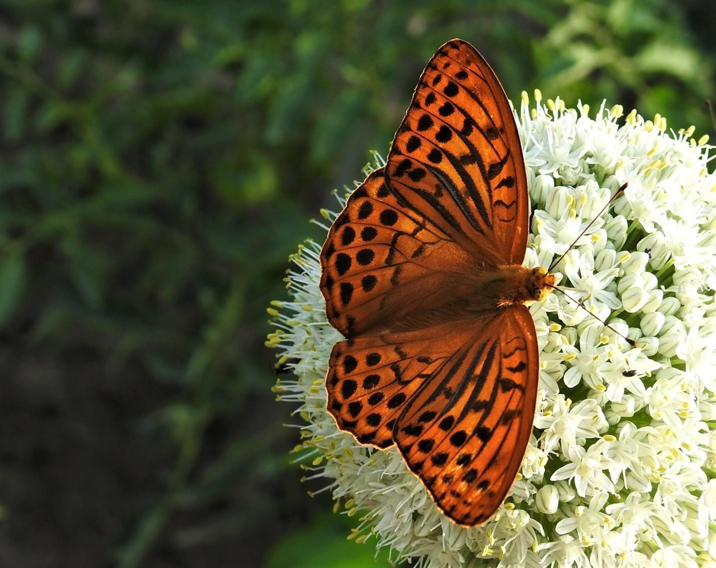 Roztancované motýle - Obrázok č. 3