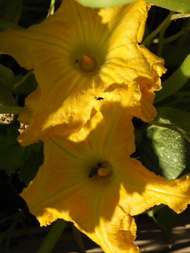 Úžitková časť záhrady. - Obrázok č. 3