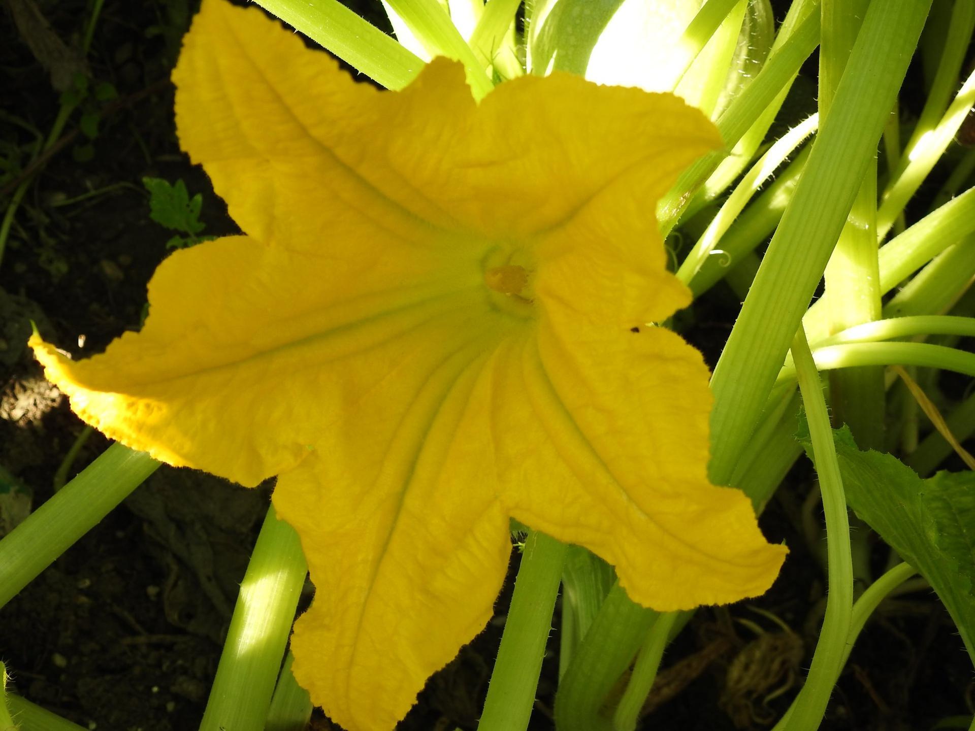 Úžitková časť záhrady. - Obrázok č. 11
