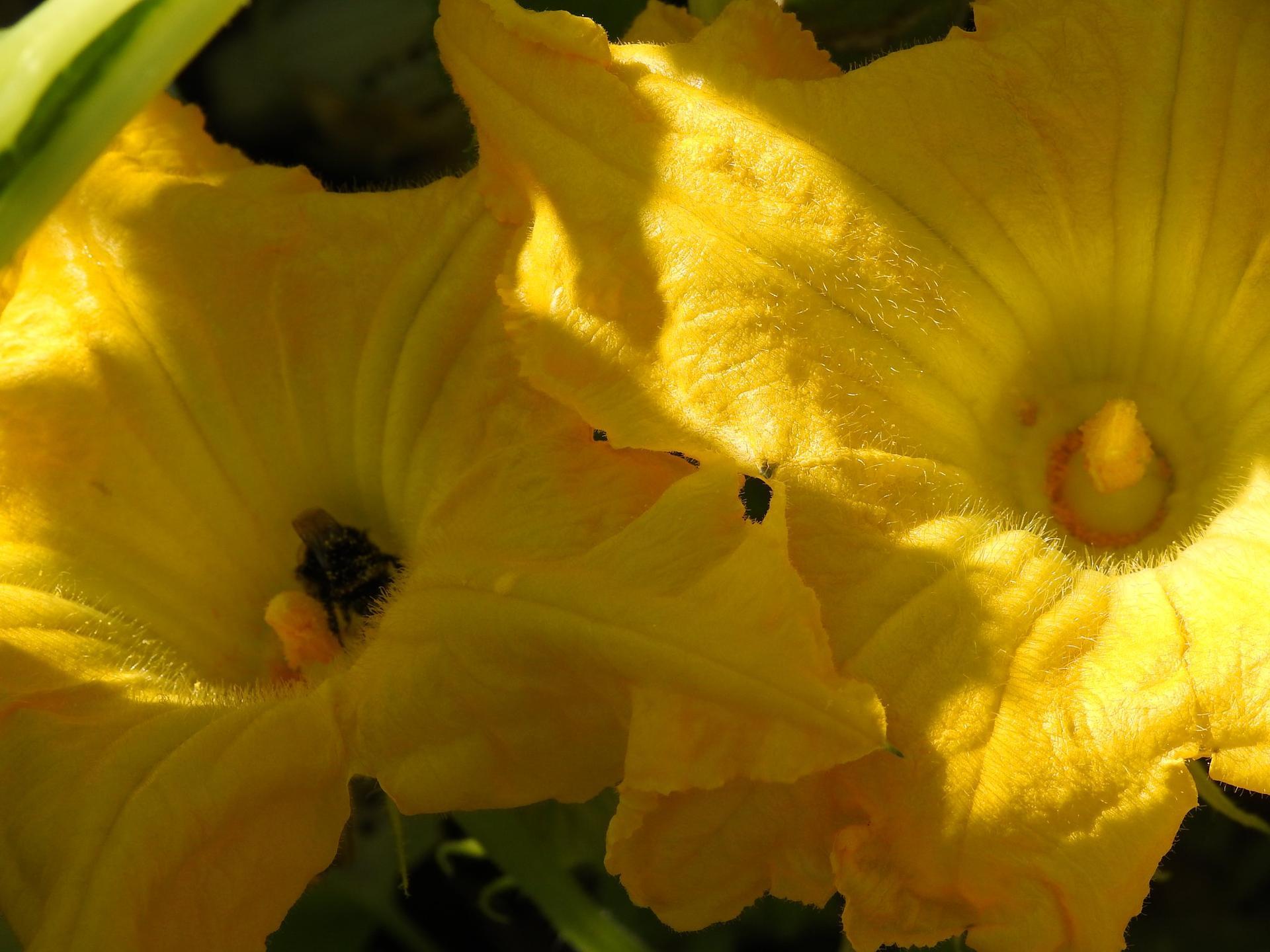 Úžitková časť záhrady. - Obrázok č. 10