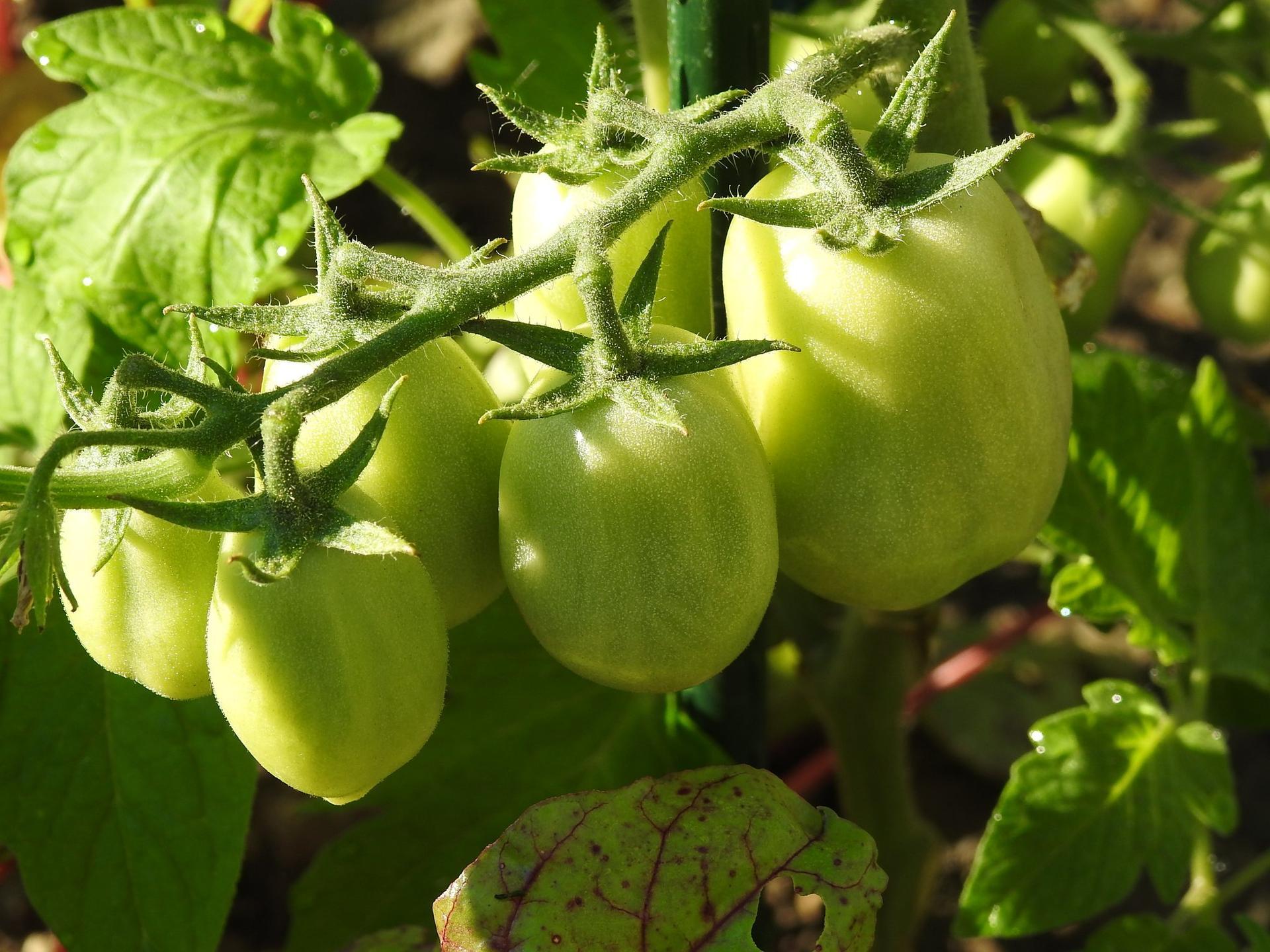Úžitková časť záhrady. - Obrázok č. 8