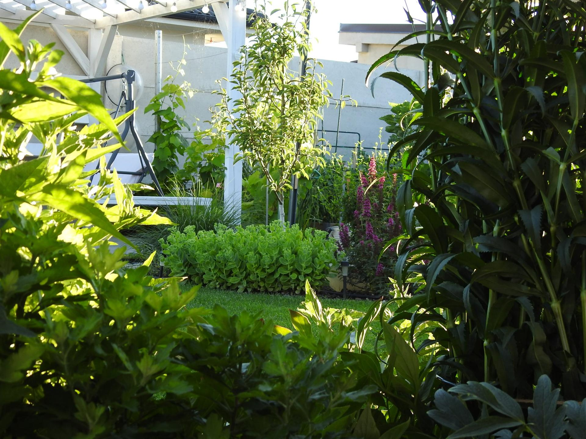 Úžitková časť záhrady. - Obrázok č. 22