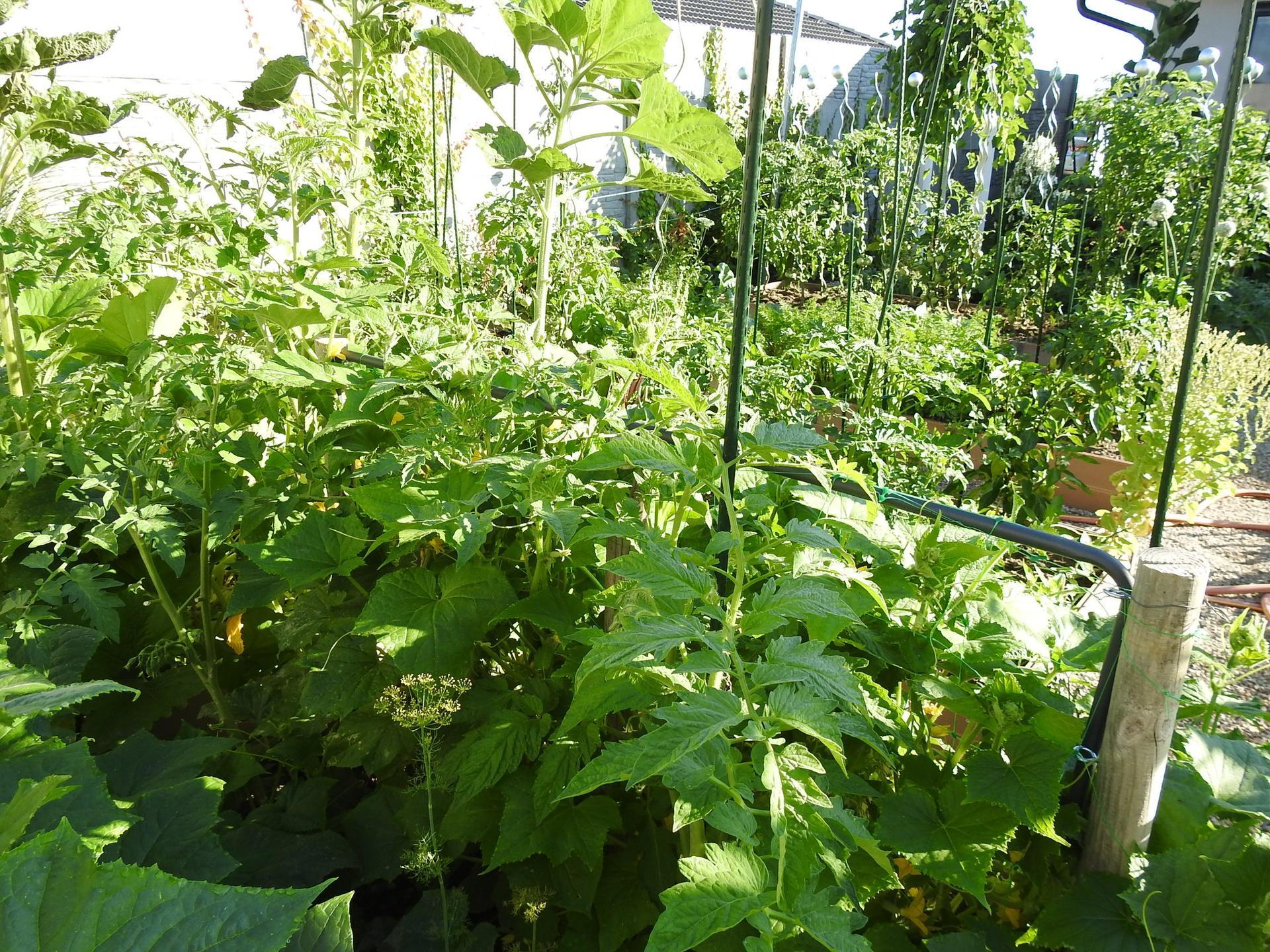 Úžitková časť záhrady. - Obrázok č. 18