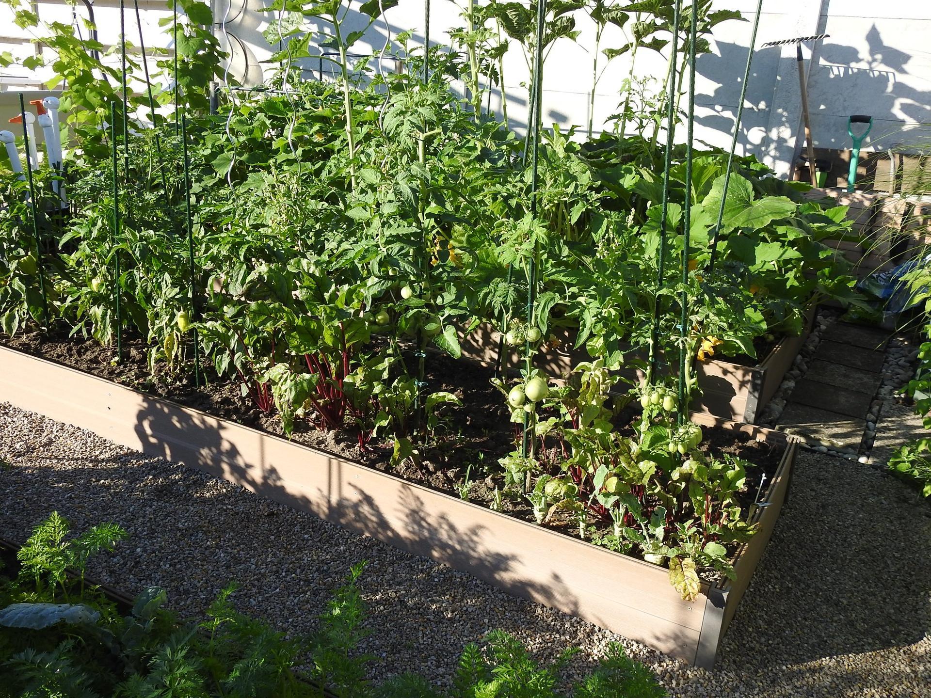 Úžitková časť záhrady. - Obrázok č. 9