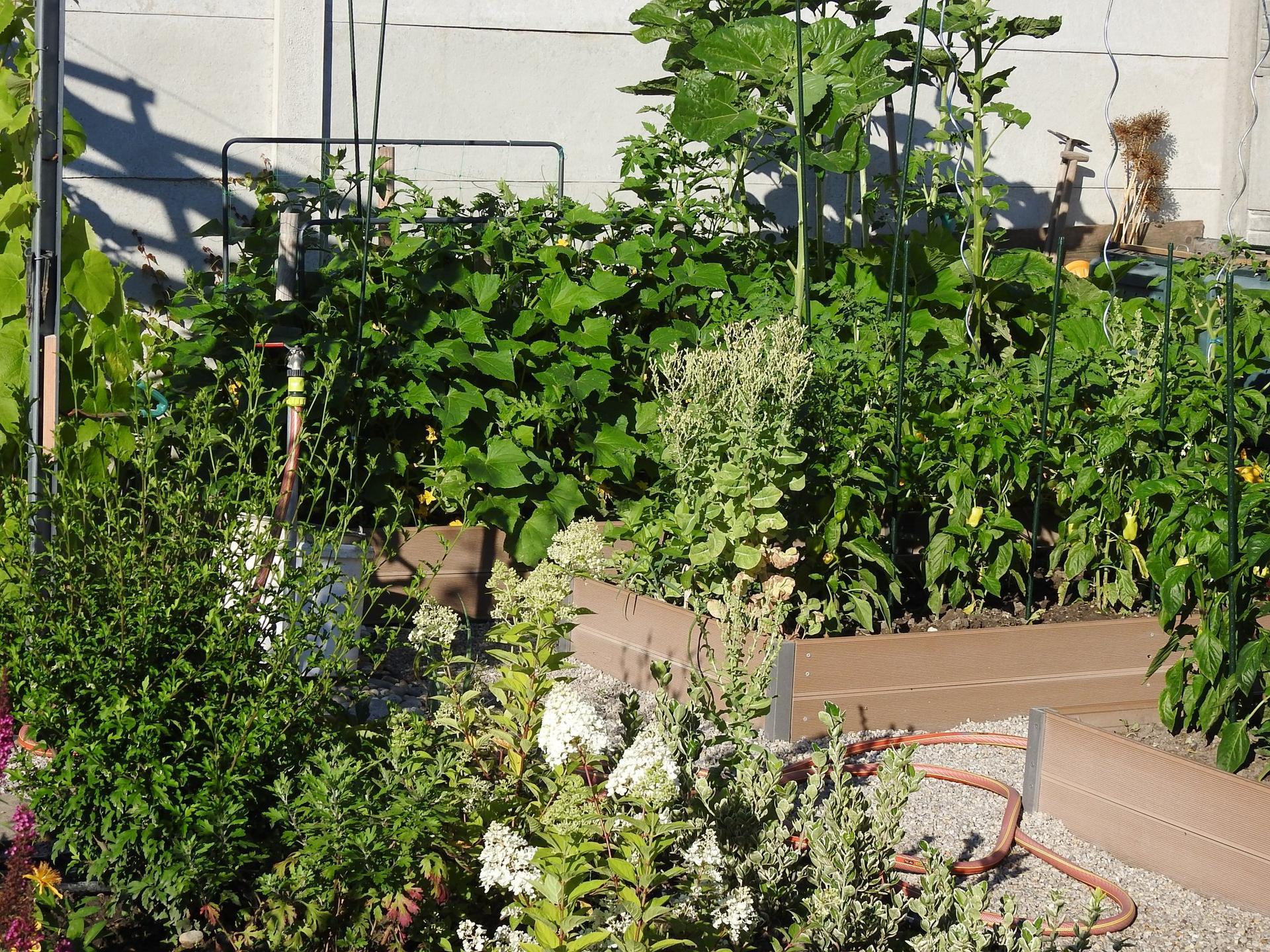Úžitková časť záhrady. - Obrázok č. 20