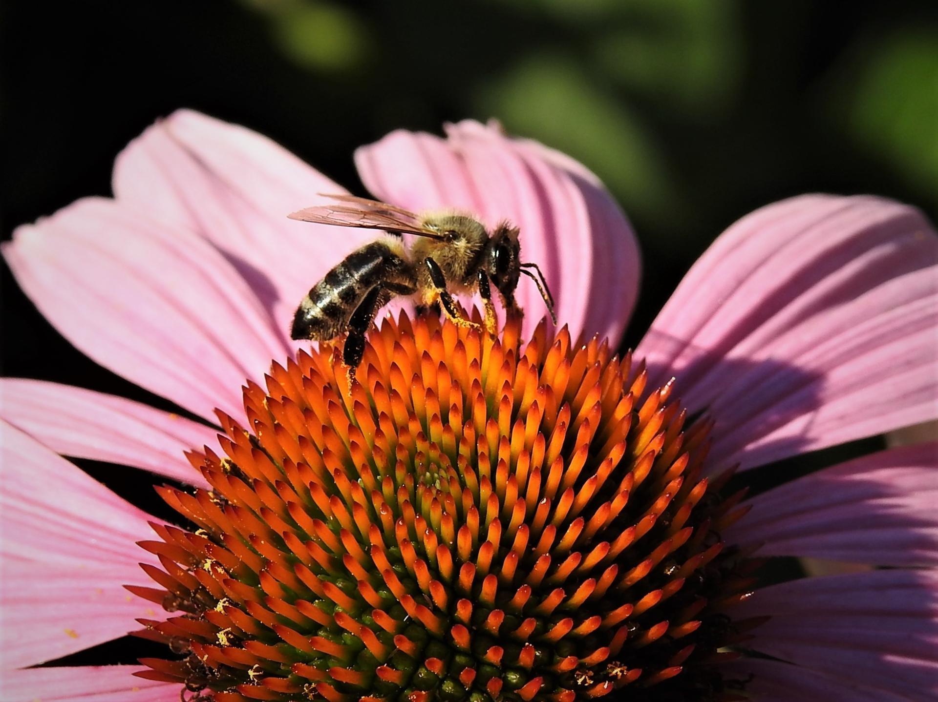 júl mesiac letných kvetov - Obrázok č. 2