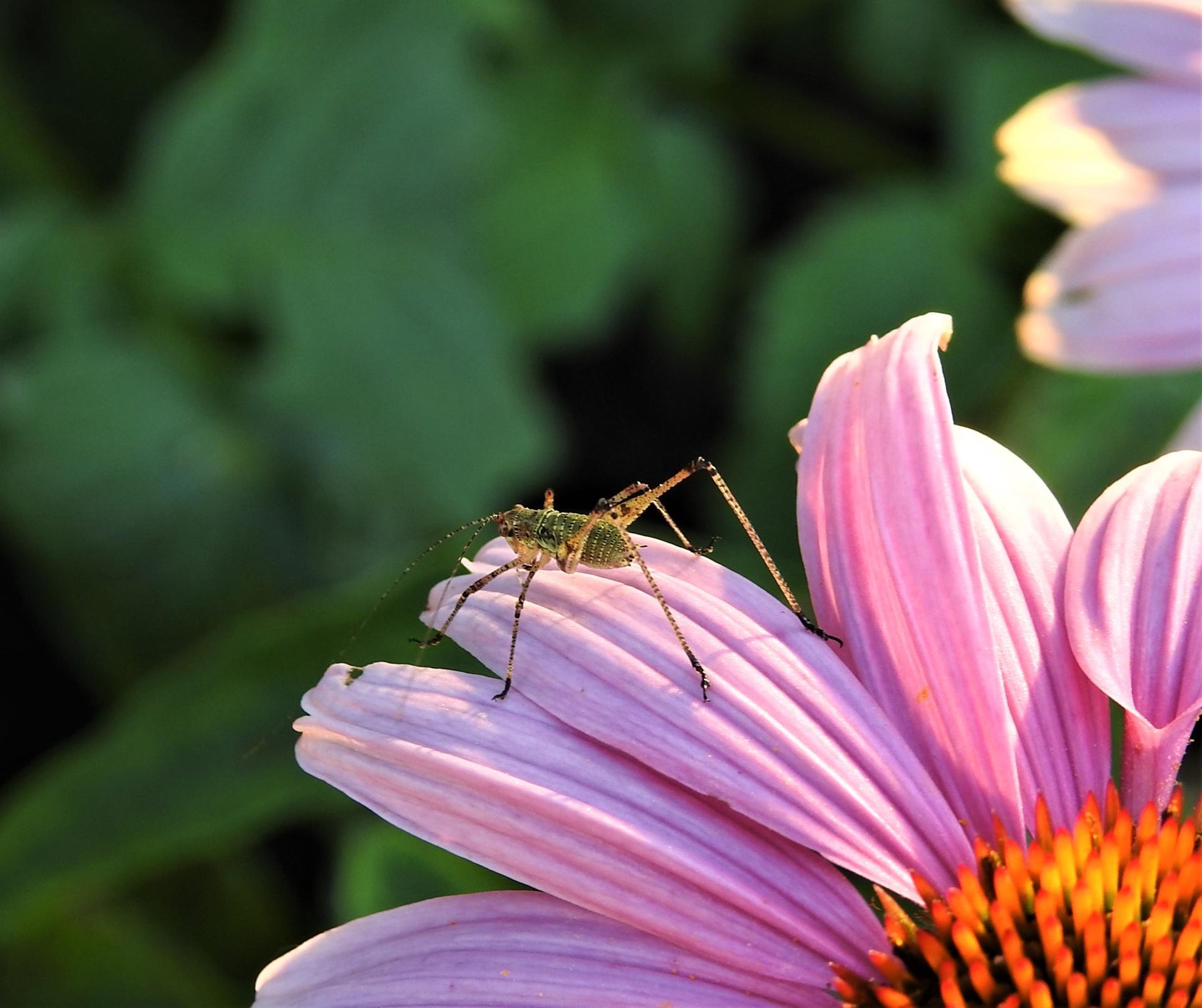 júl mesiac letných kvetov - Obrázok č. 10