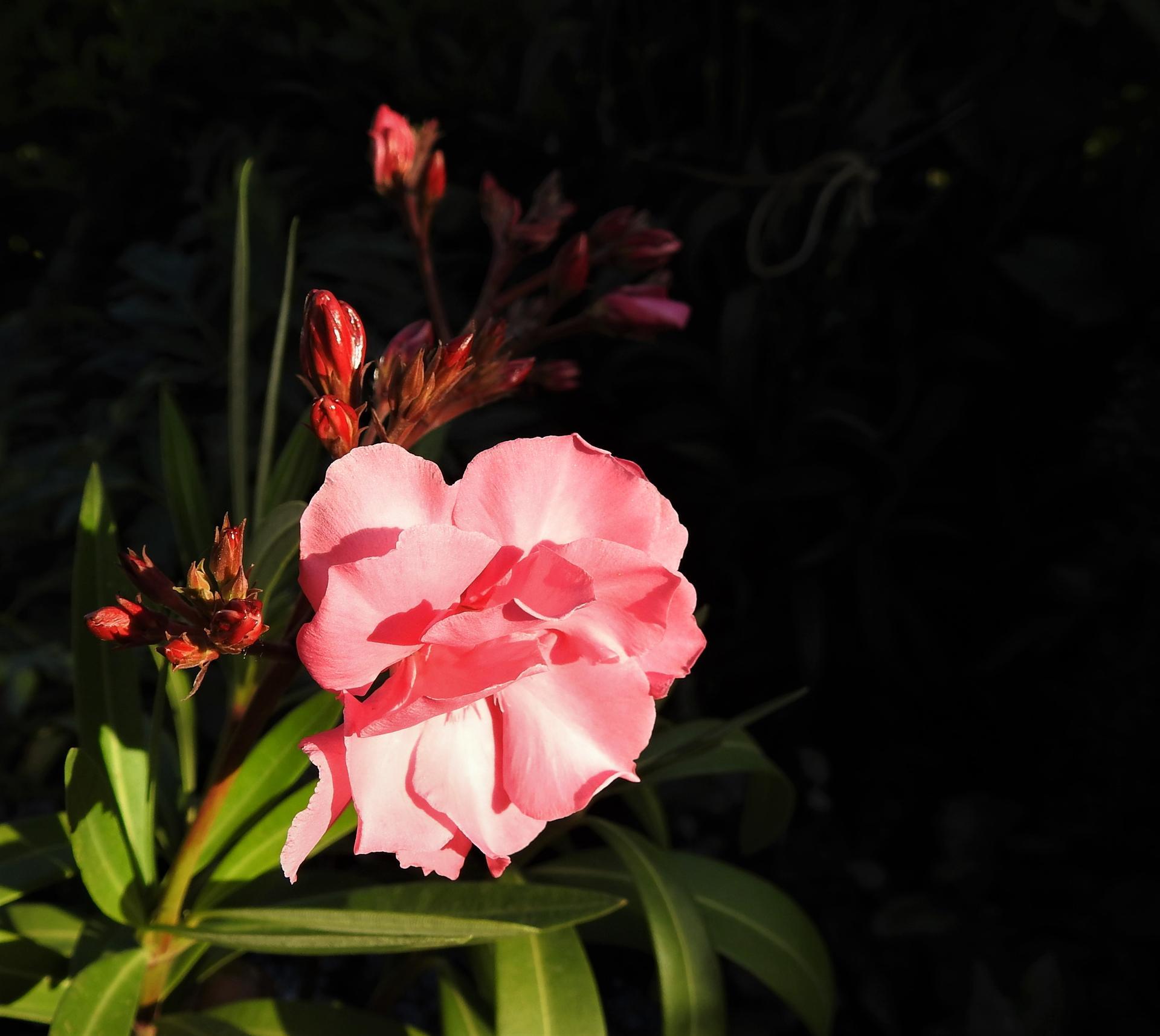 júl mesiac letných kvetov - Obrázok č. 20