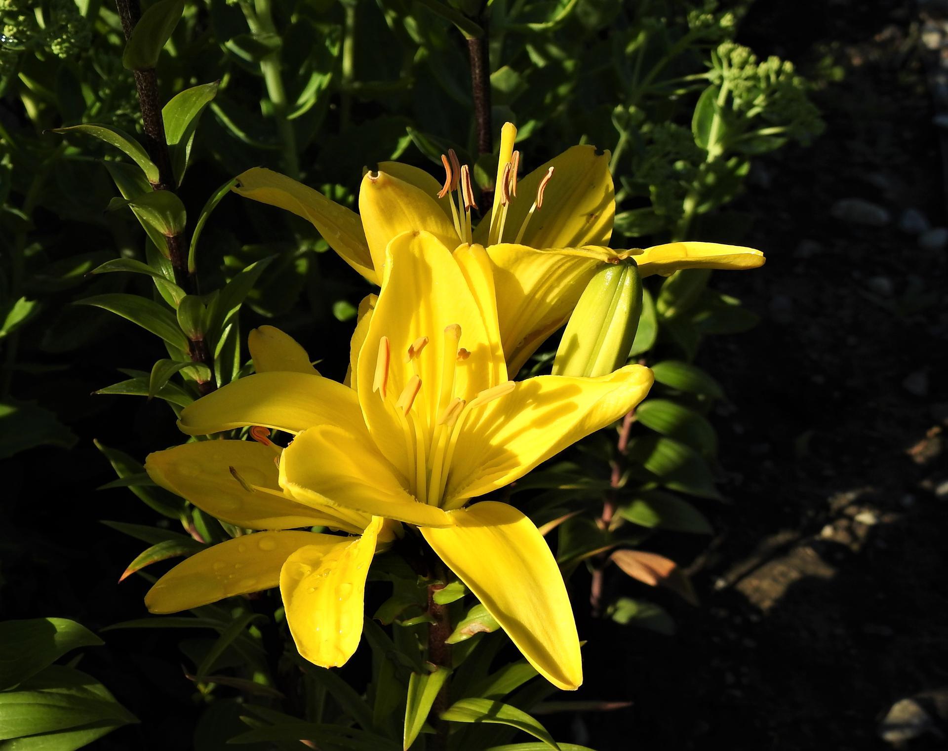júl mesiac letných kvetov - Obrázok č. 3
