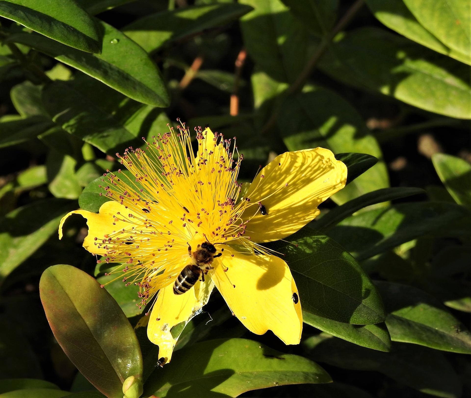 júl mesiac letných kvetov - Obrázok č. 7