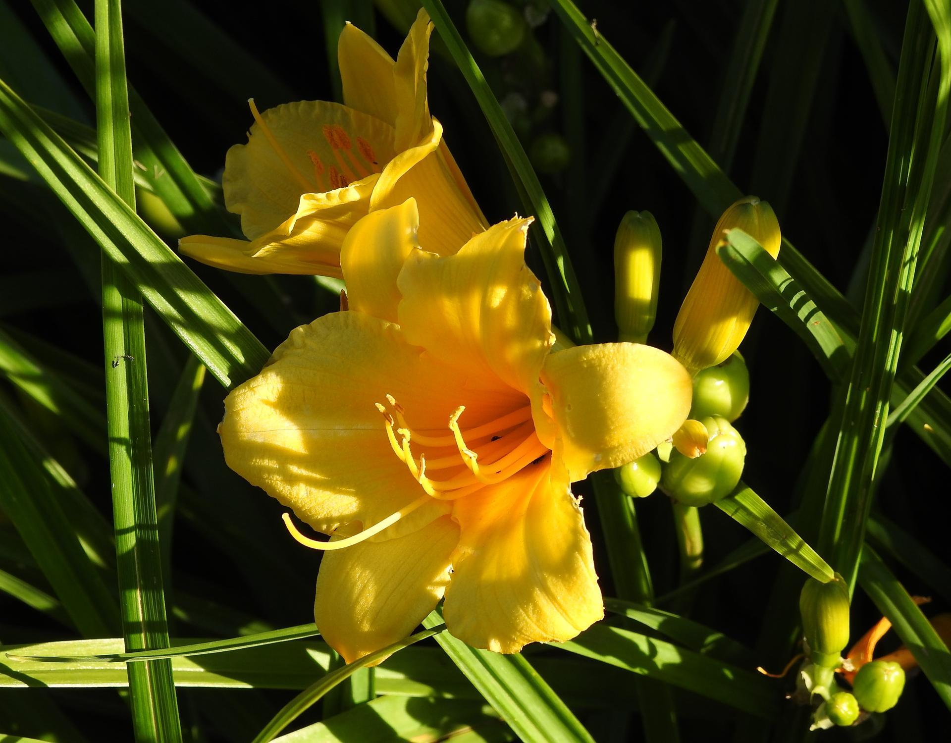júl mesiac letných kvetov - Obrázok č. 22