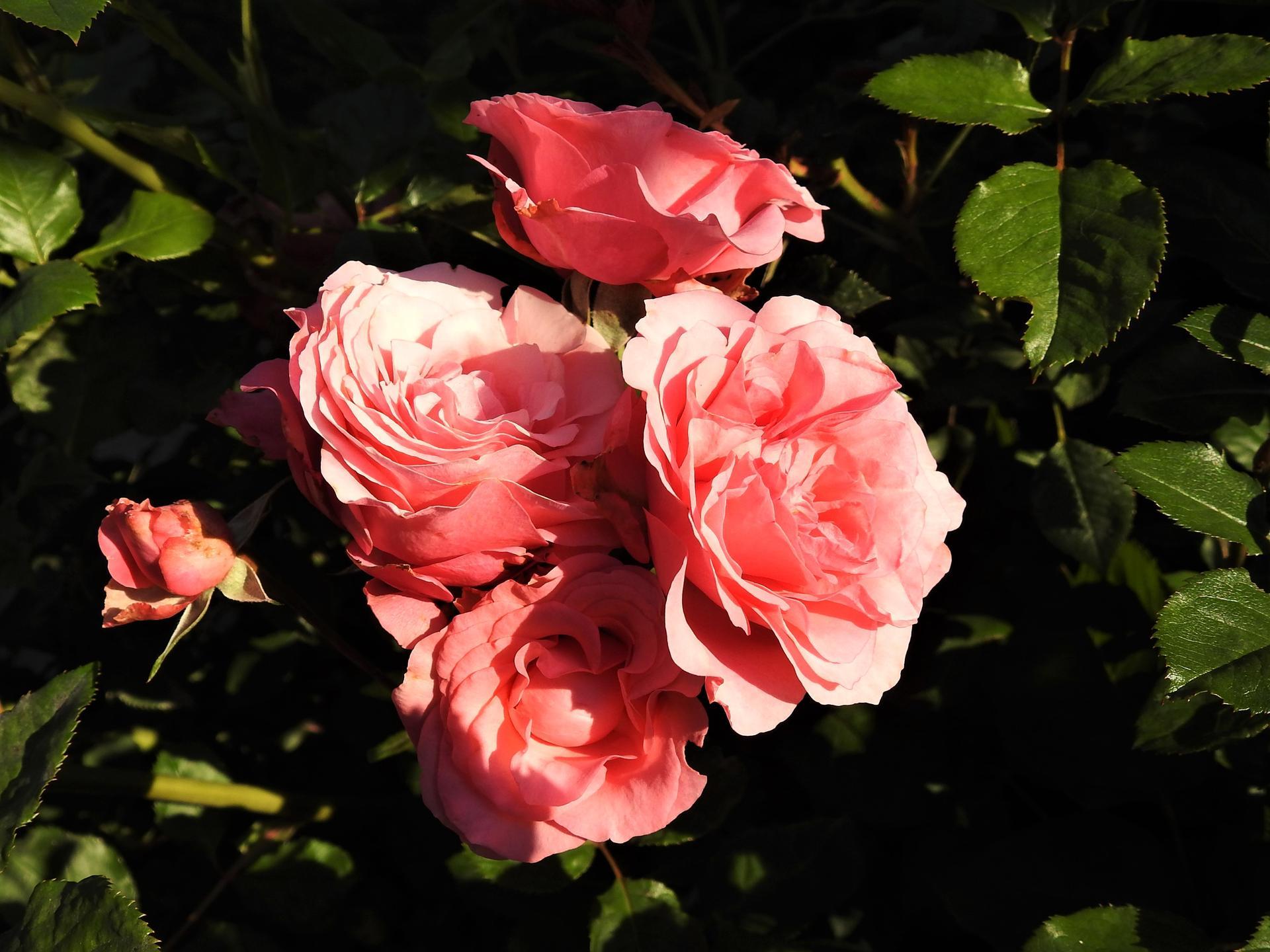 júl mesiac letných kvetov - Obrázok č. 14