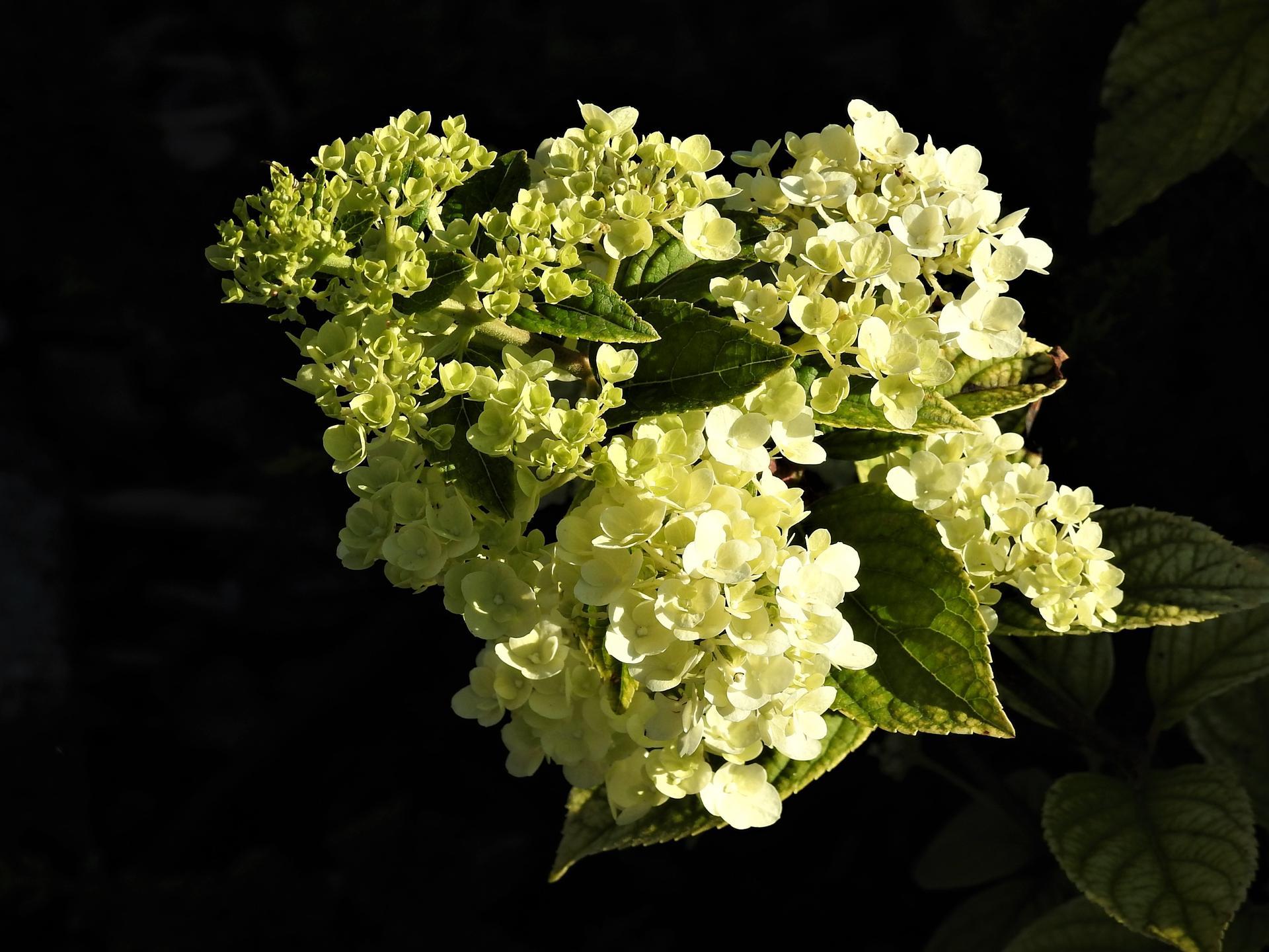 júl mesiac letných kvetov - Obrázok č. 4
