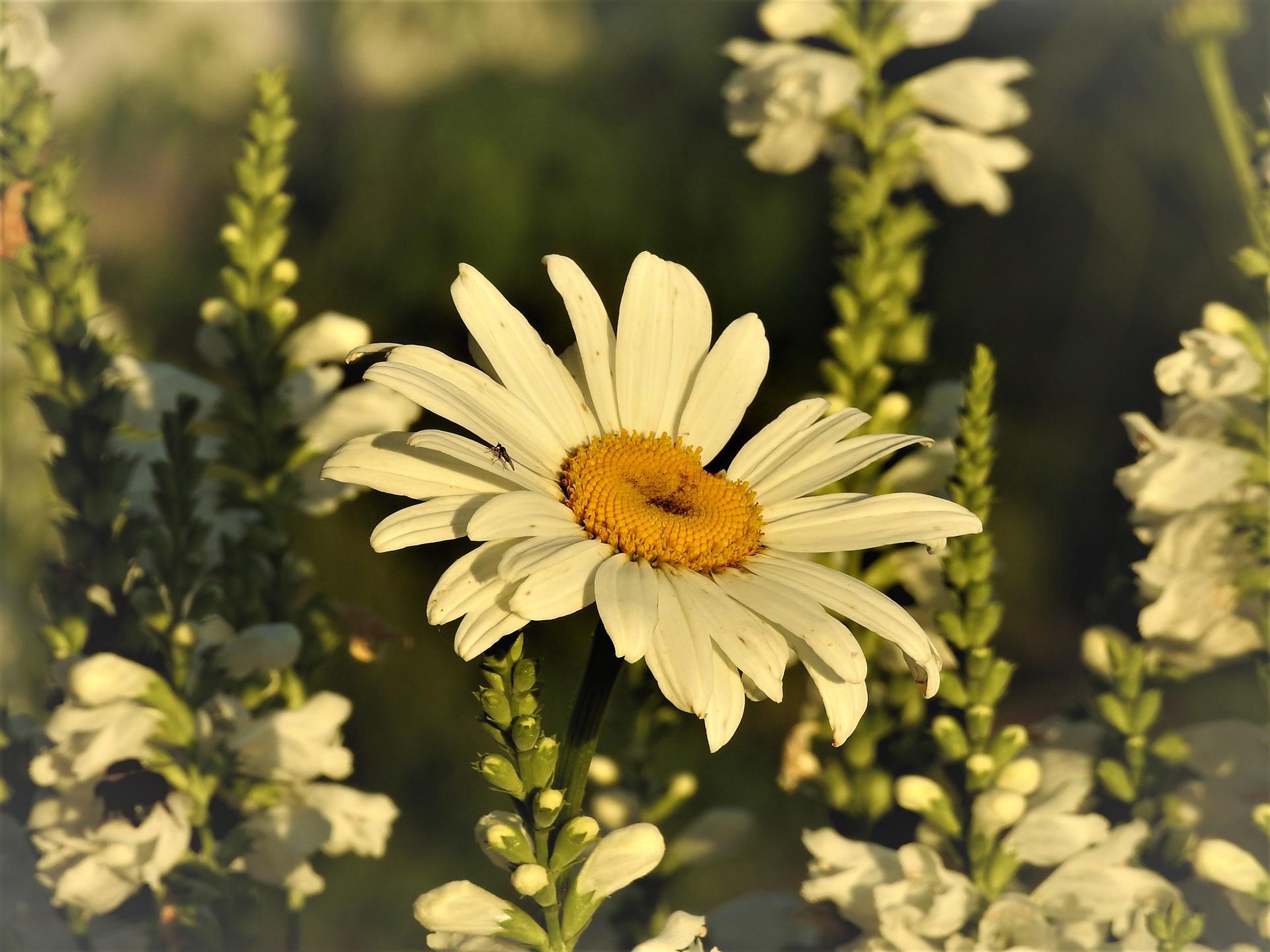 júl mesiac letných kvetov - Obrázok č. 9