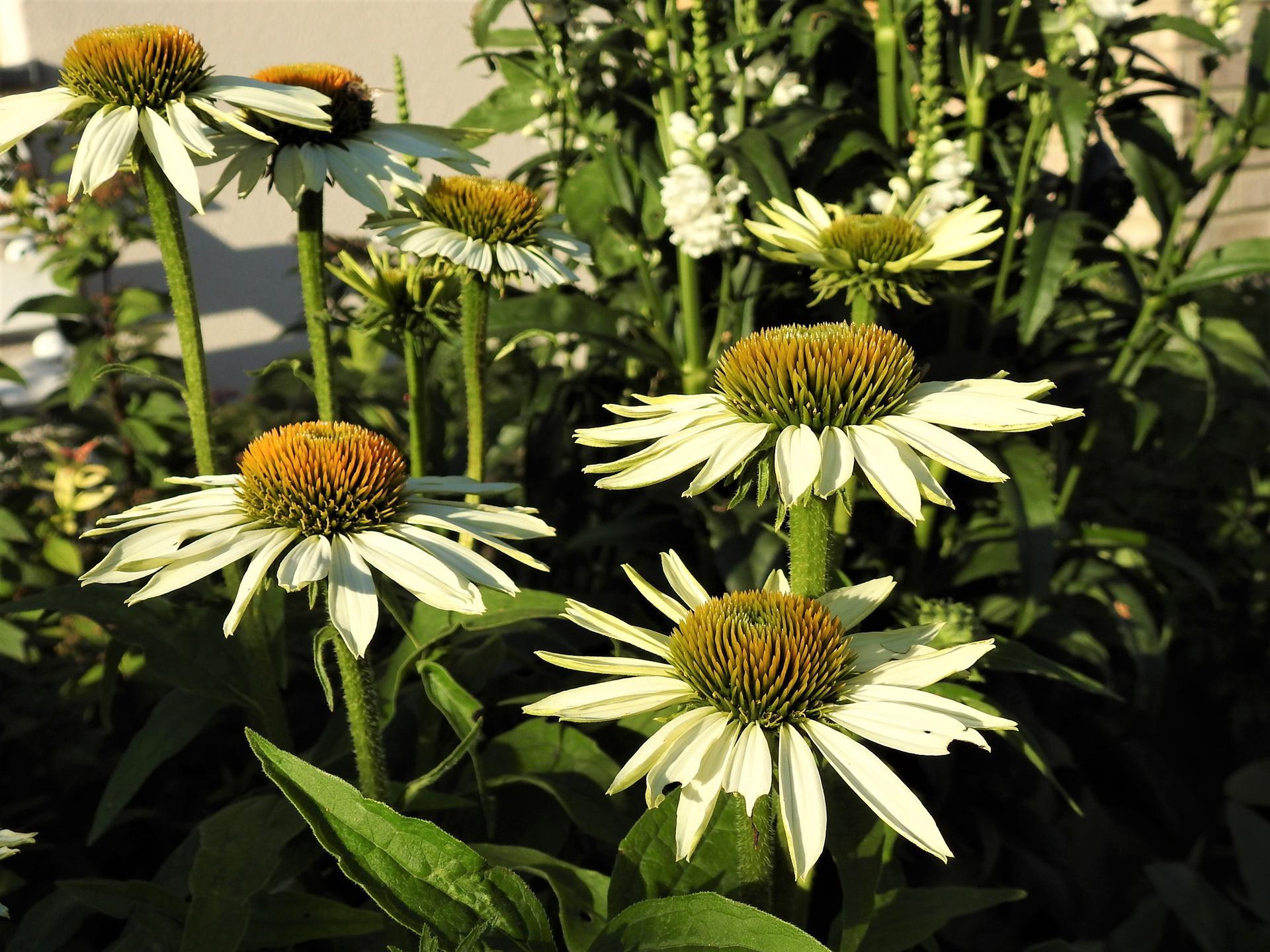 júl mesiac letných kvetov - Obrázok č. 15