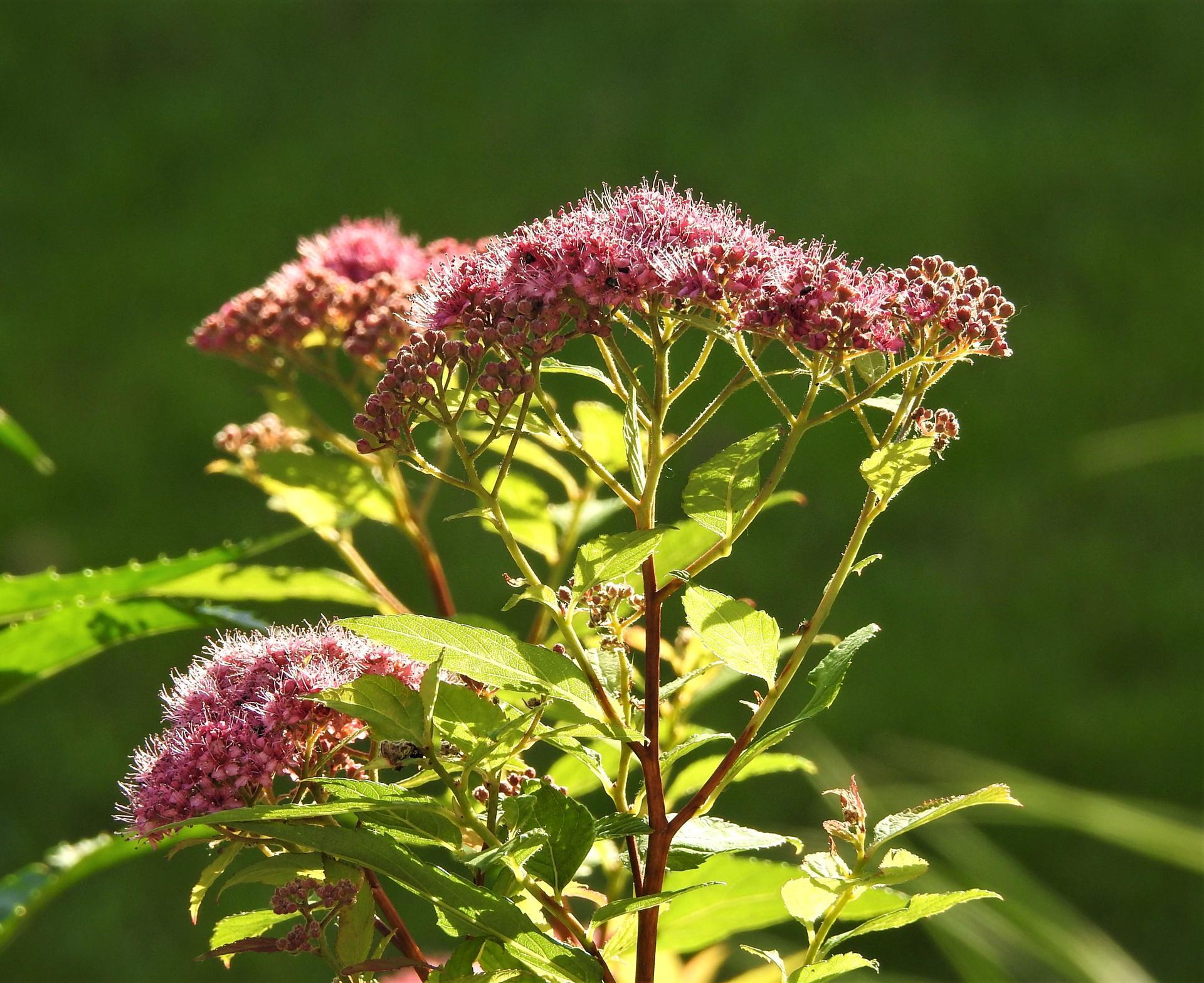 júl mesiac letných kvetov - Obrázok č. 24