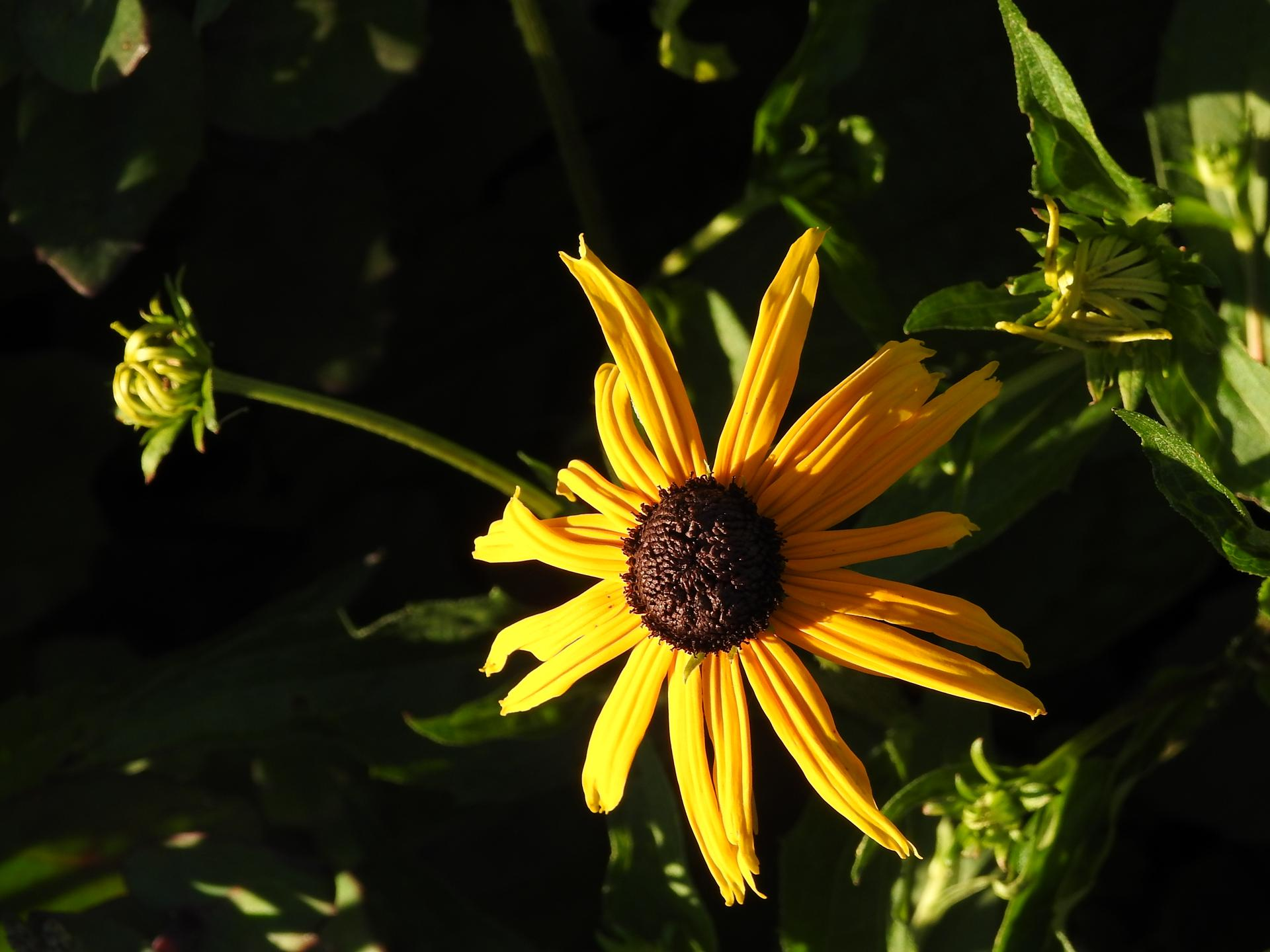 júl mesiac letných kvetov - Obrázok č. 17