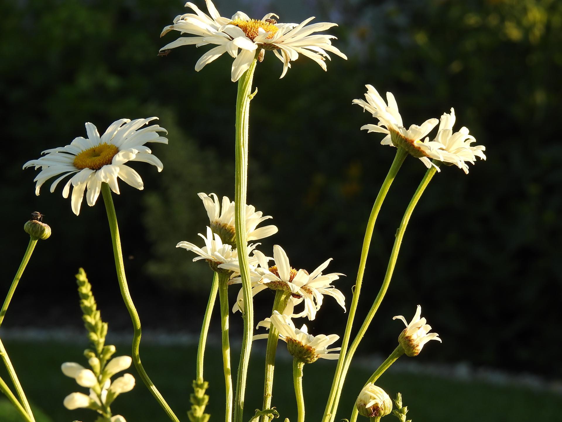 júl mesiac letných kvetov - Obrázok č. 8