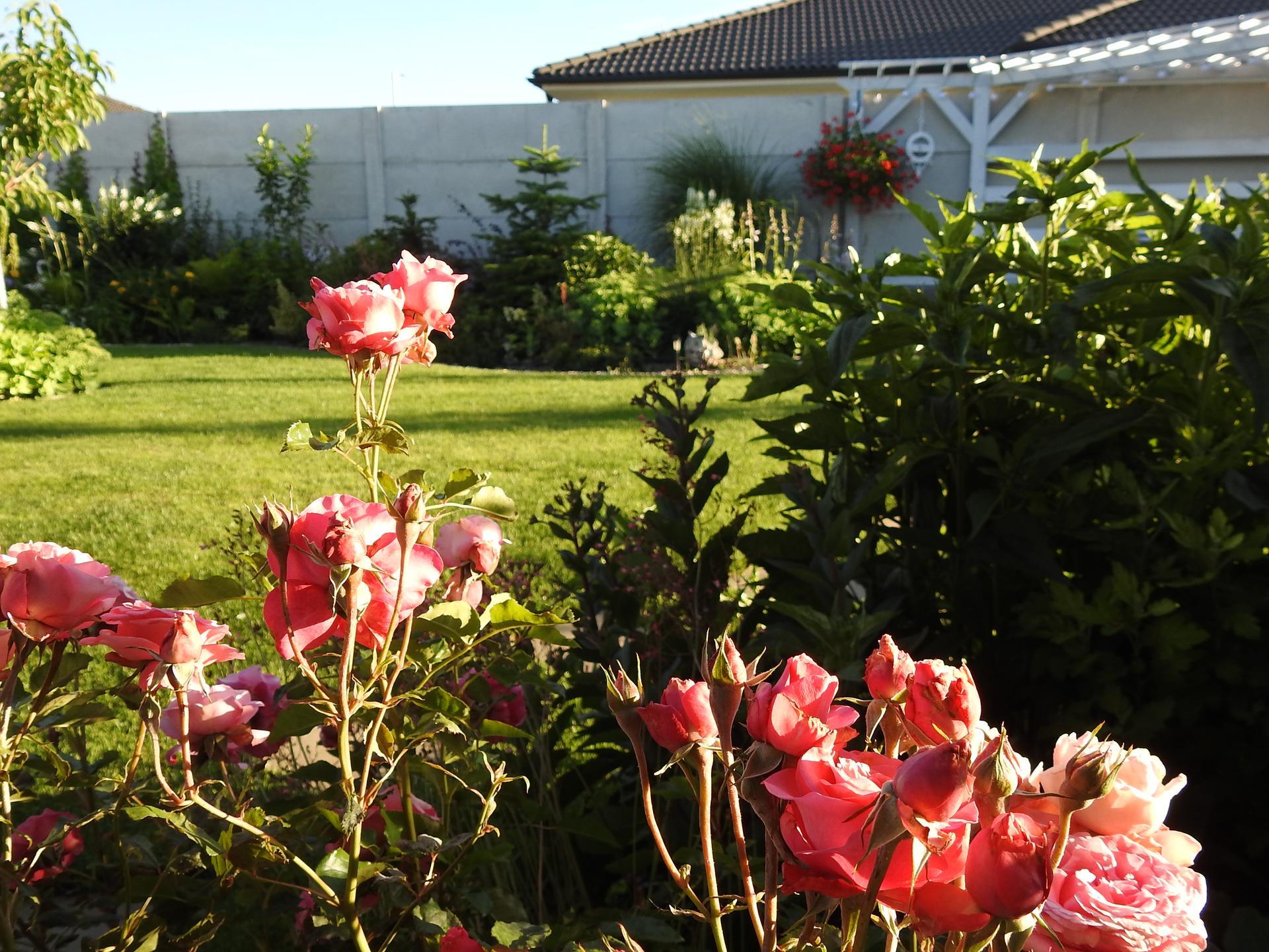 júl mesiac letných kvetov - Obrázok č. 18