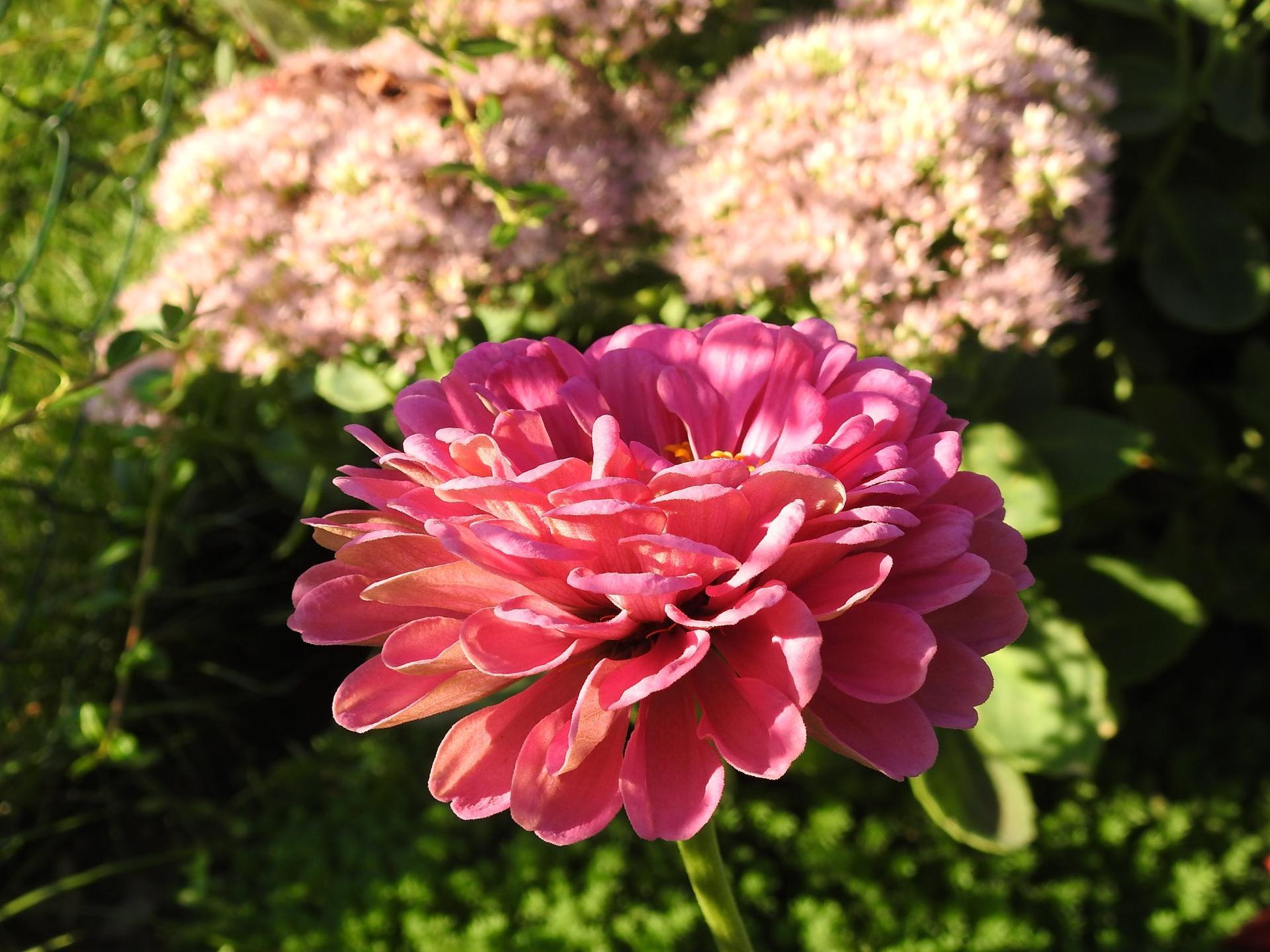 Letné krásky - Obrázok č. 3