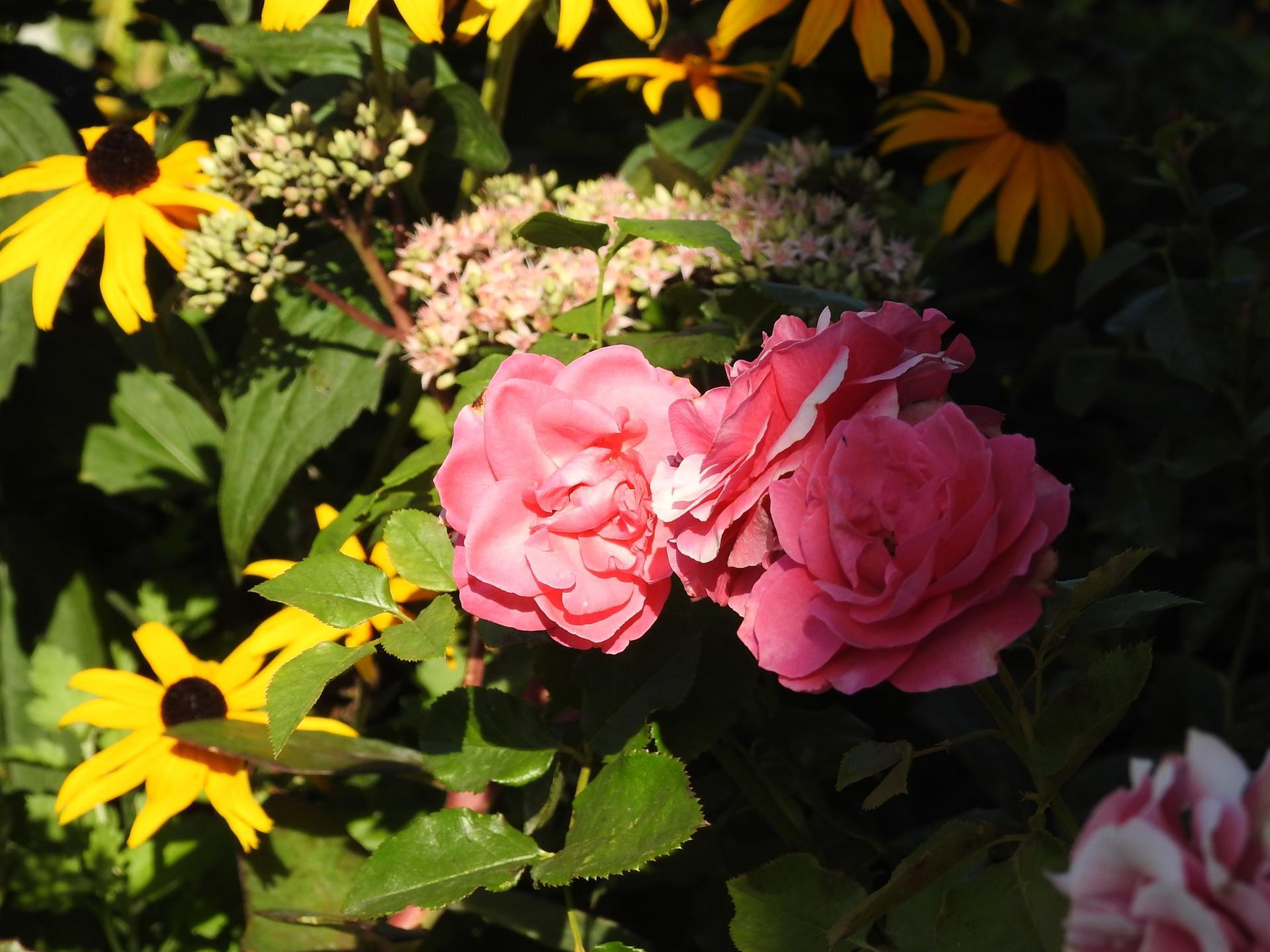 Letné krásky - Obrázok č. 33
