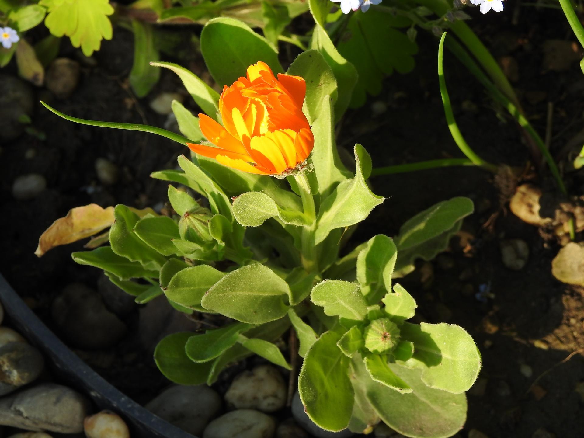 Máj v záhradke - Obrázok č. 10