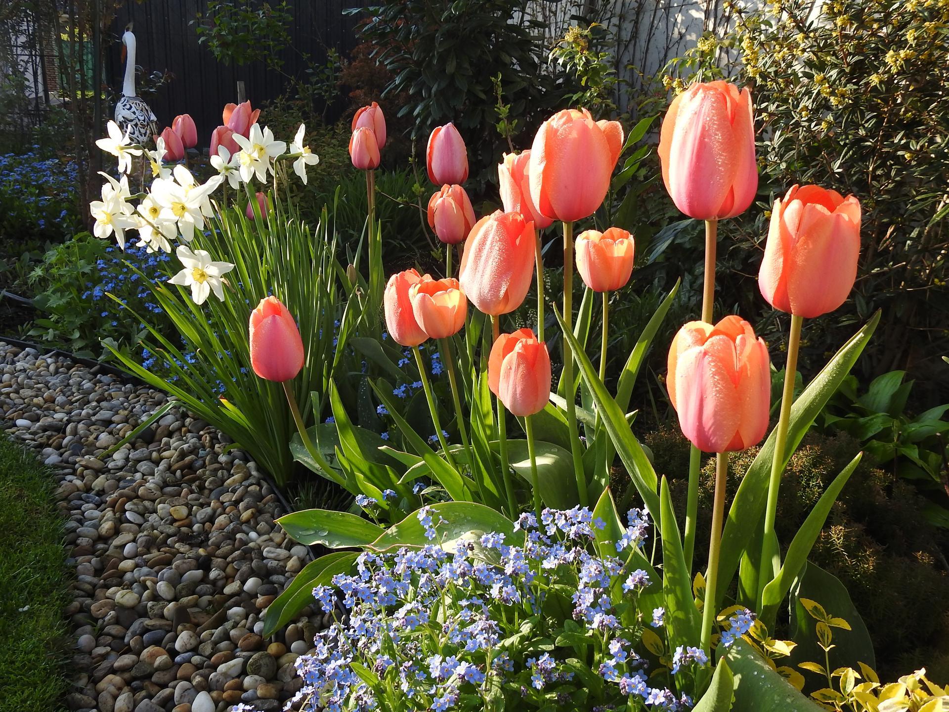 Máj v záhradke - Obrázok č. 12