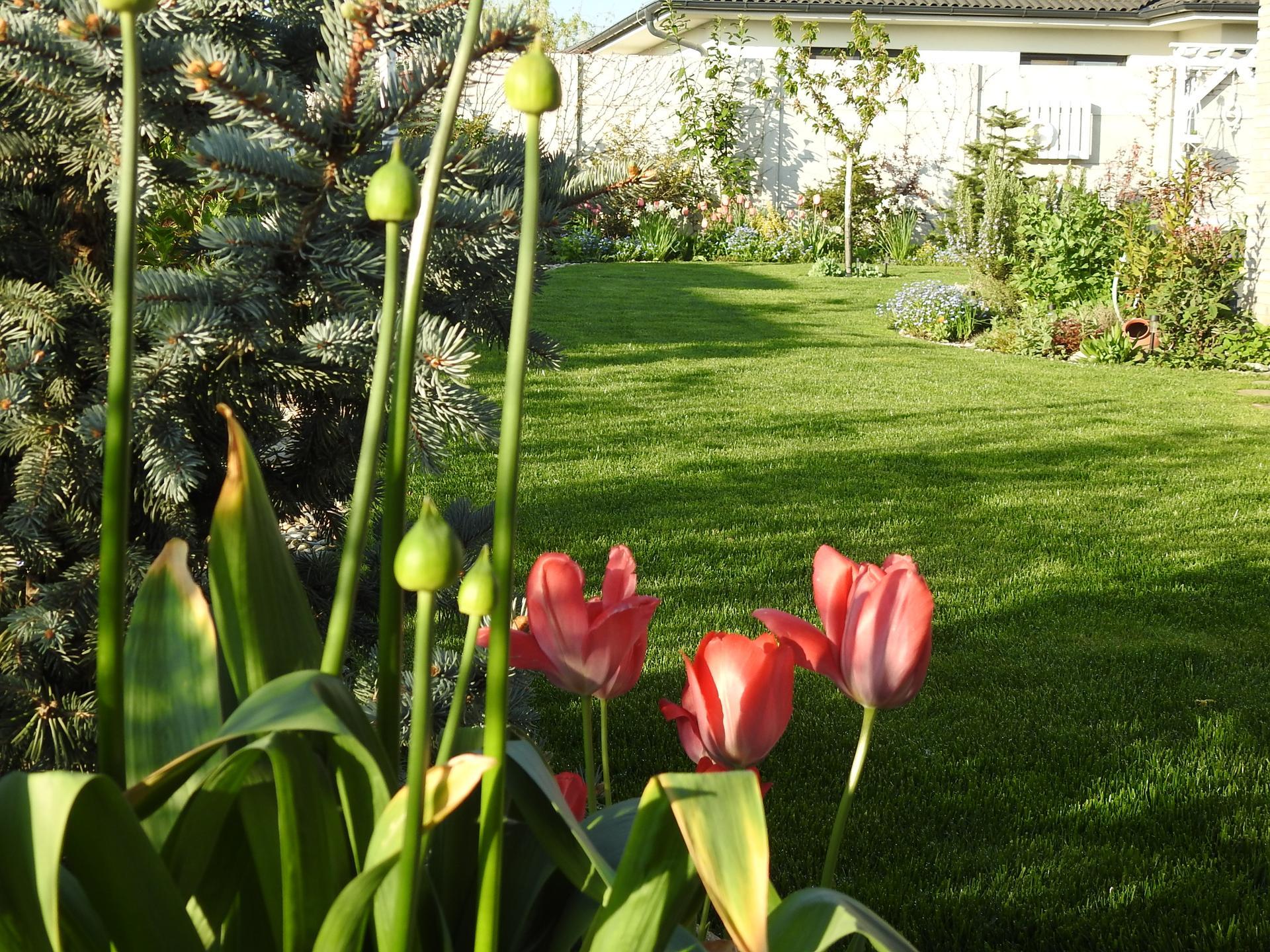 Máj v záhradke - Obrázok č. 18
