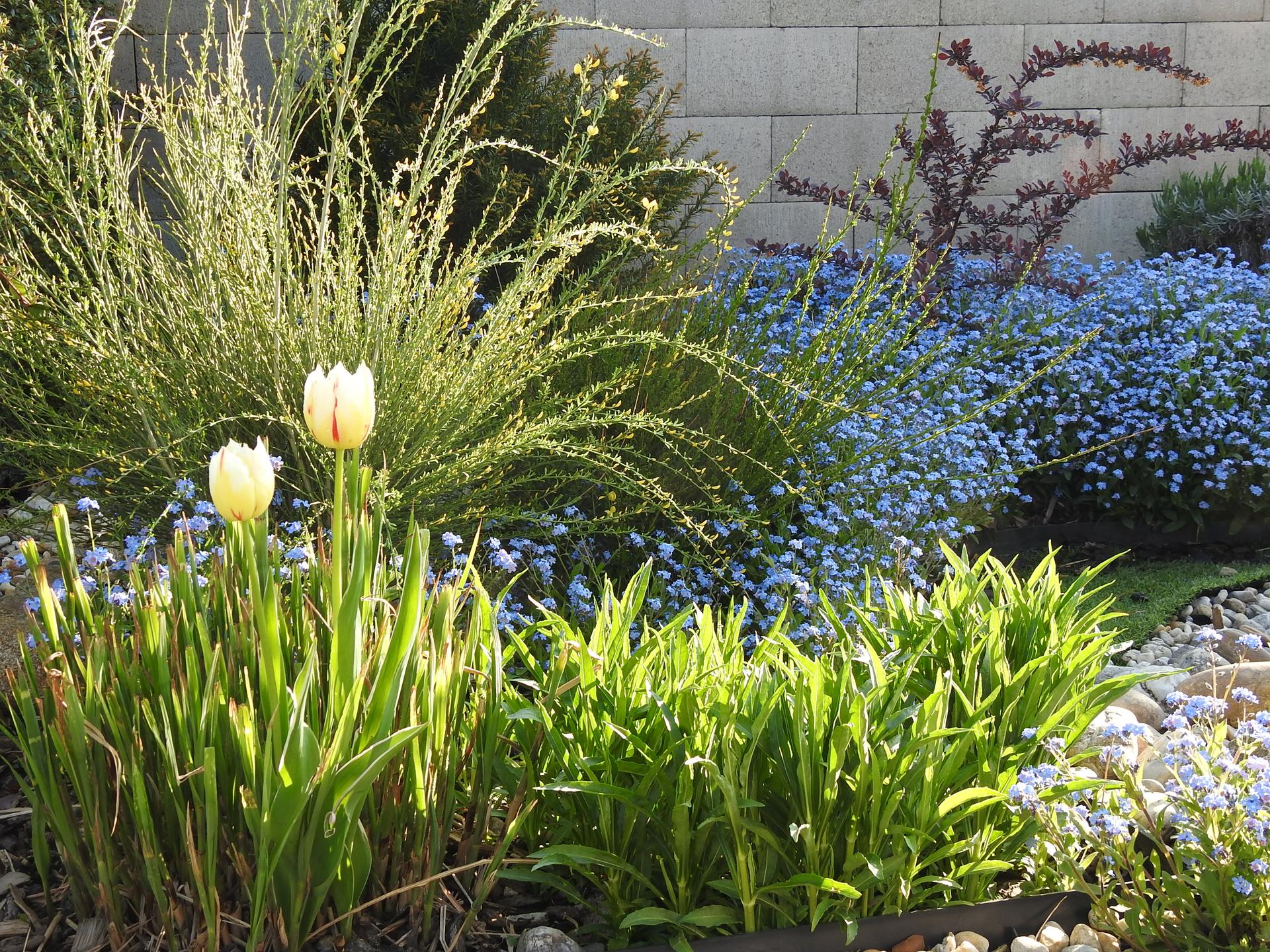 Máj v záhradke - Obrázok č. 24