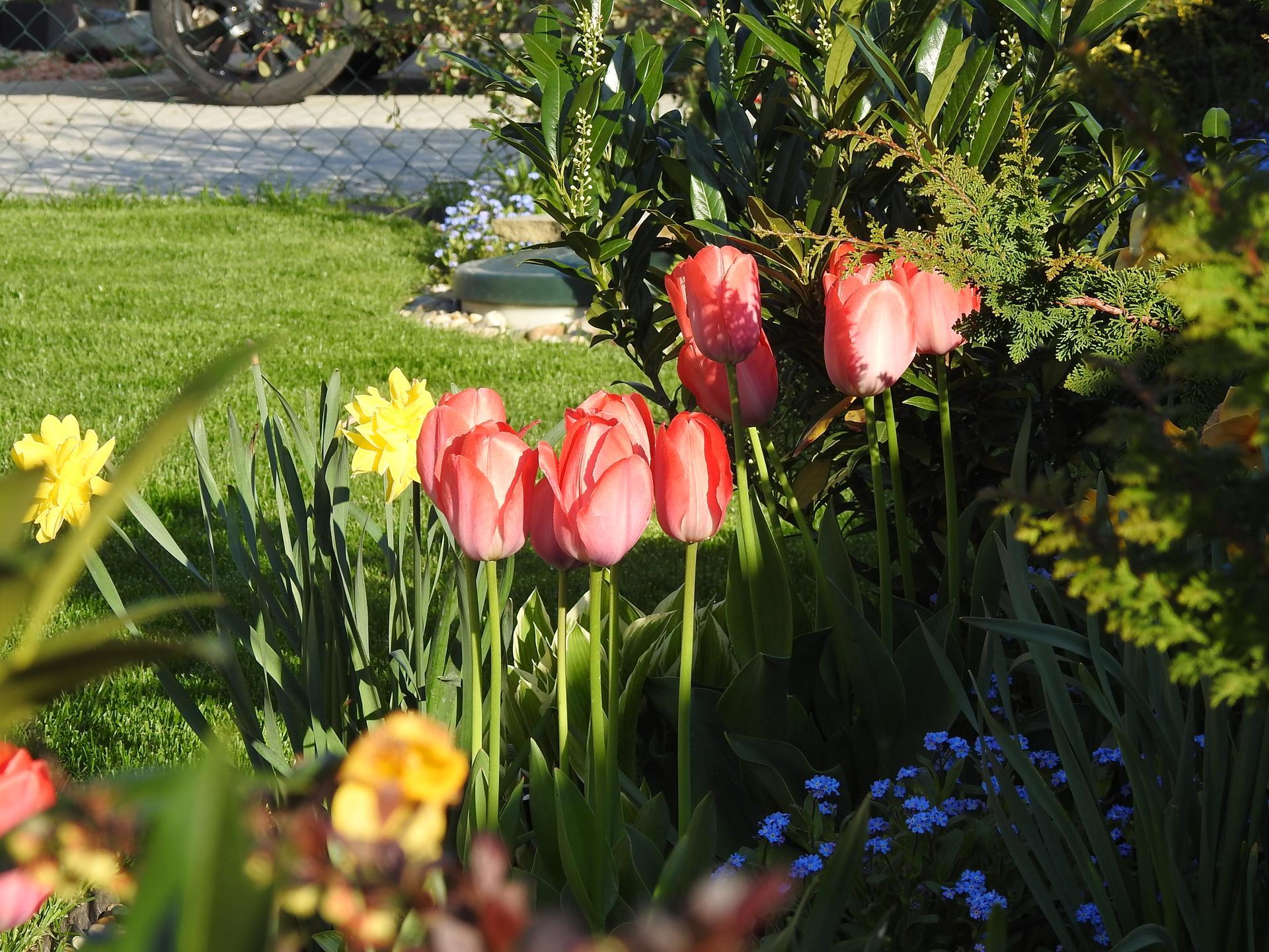 Máj v záhradke - Obrázok č. 27