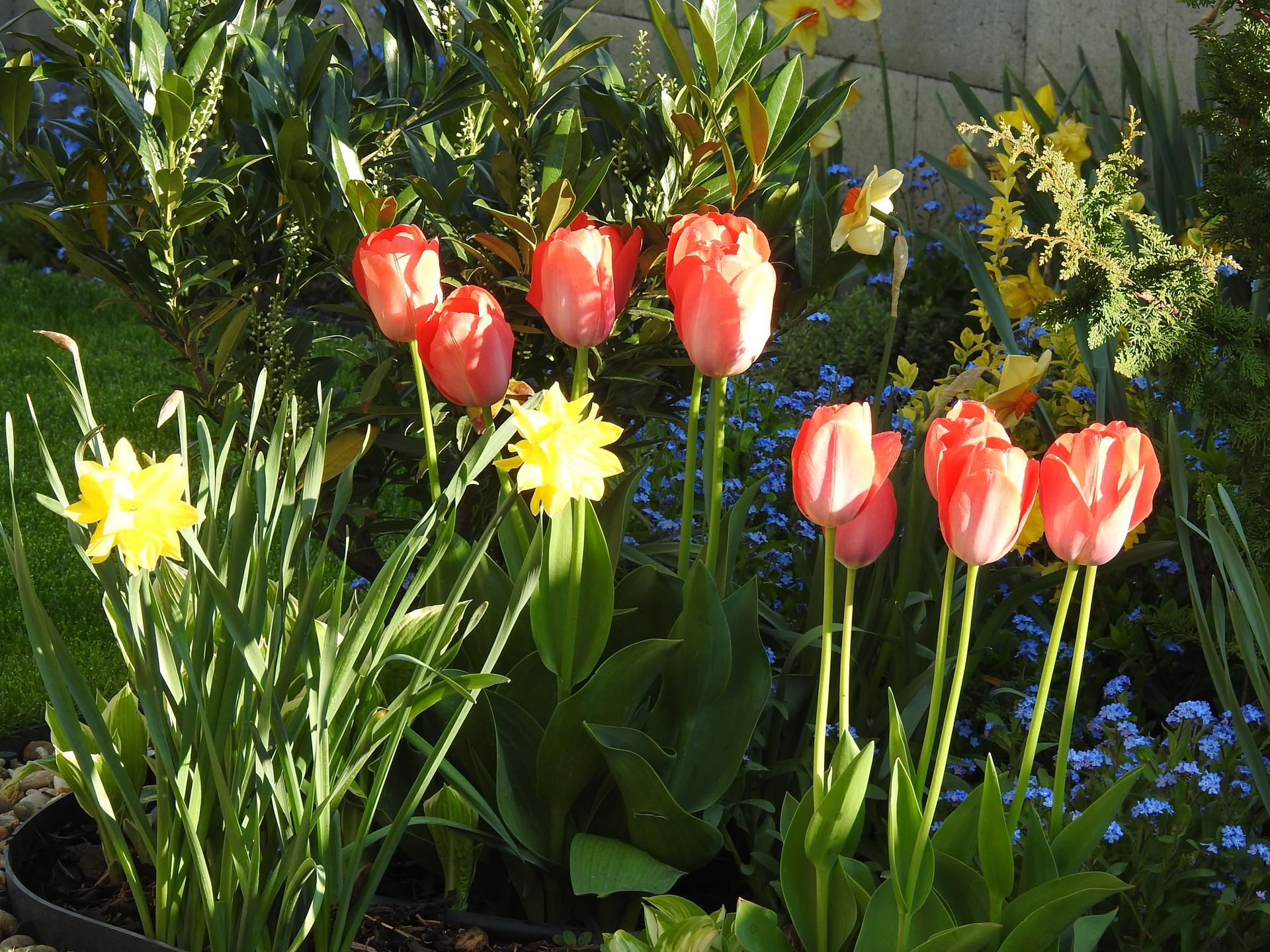 Máj v záhradke - Obrázok č. 30