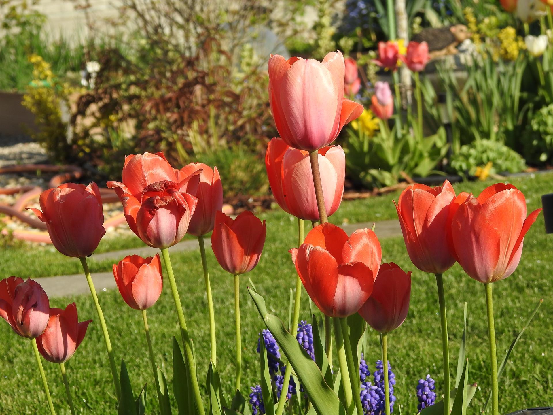 Máj v záhradke - Obrázok č. 31