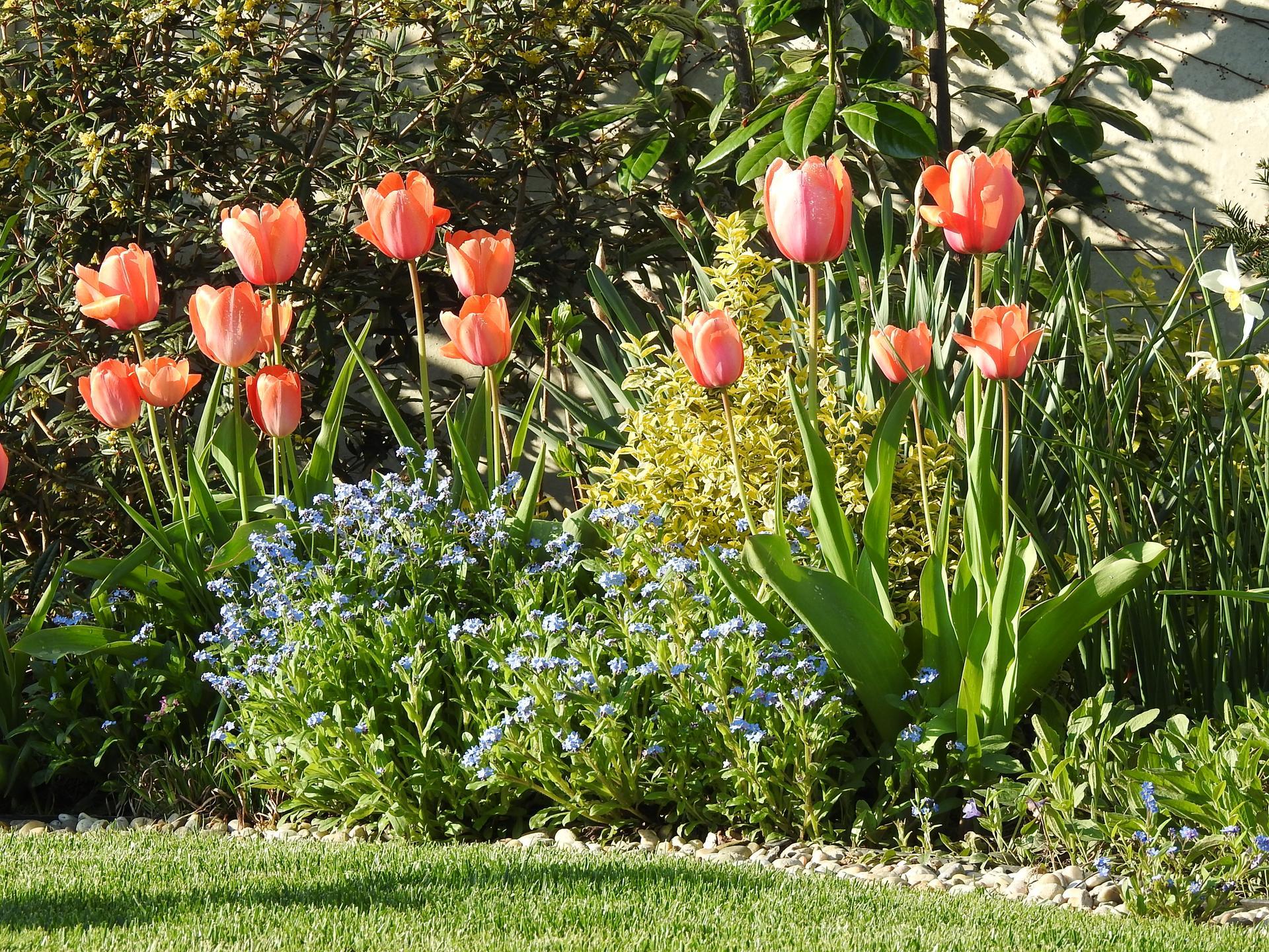 Máj v záhradke - Obrázok č. 33