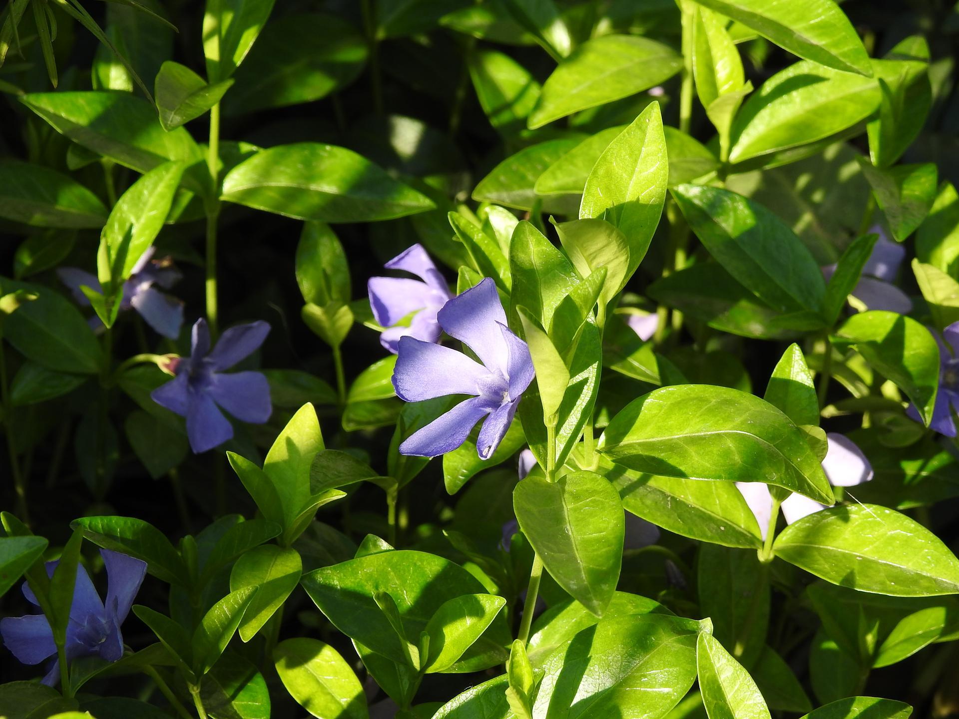 Máj v záhradke - Obrázok č. 37