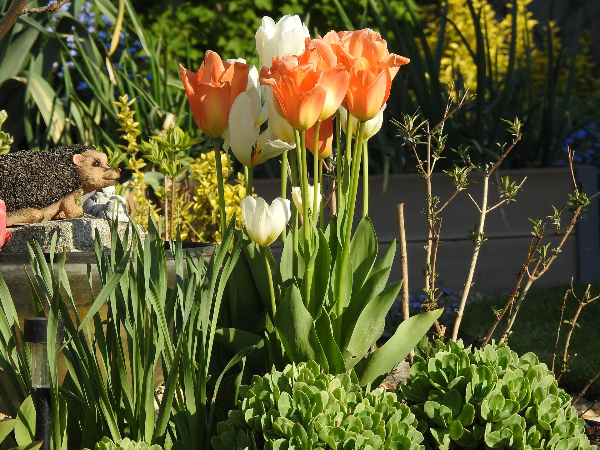 Máj v záhradke - Obrázok č. 41