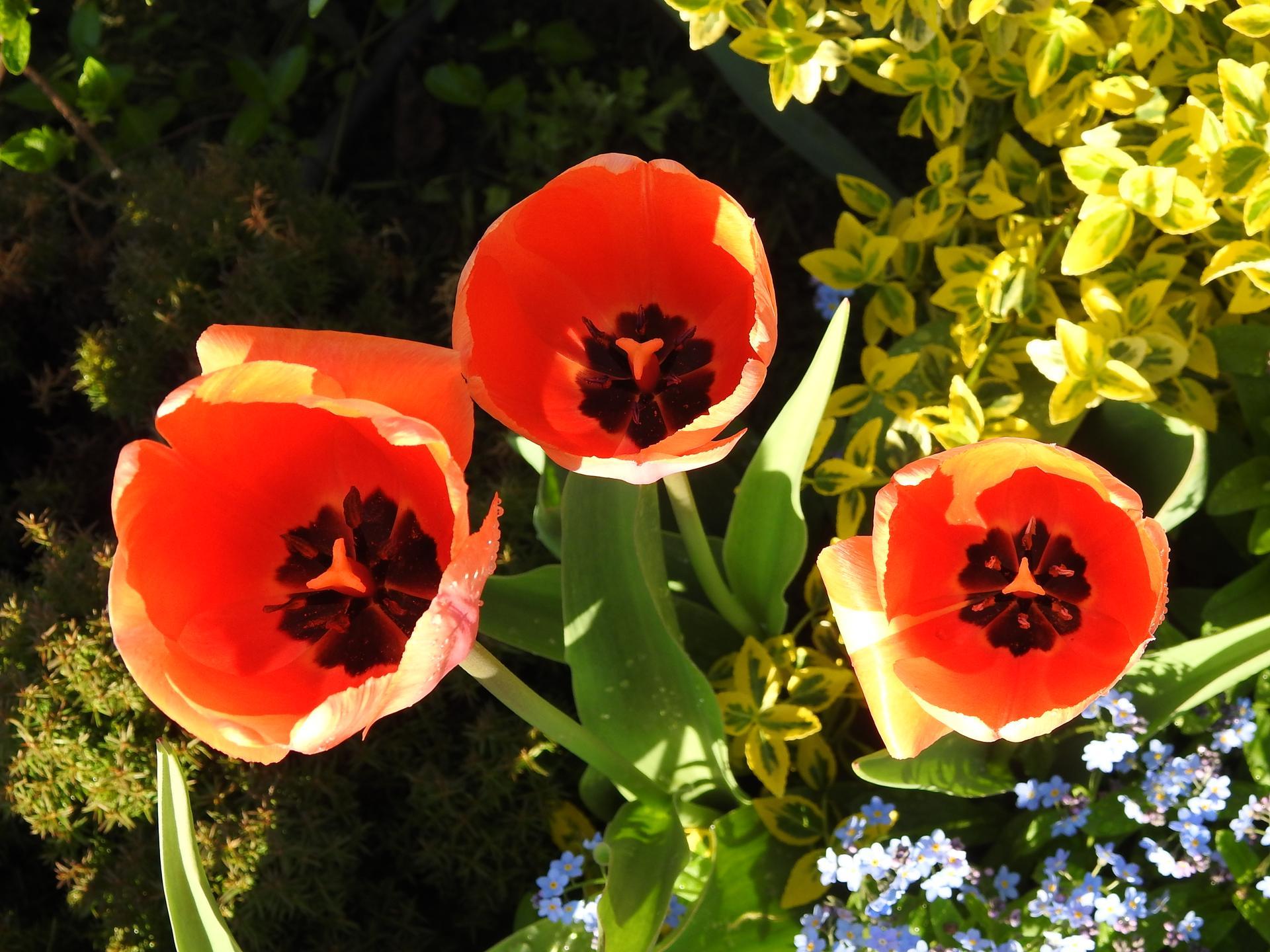 Máj v záhradke - Obrázok č. 44